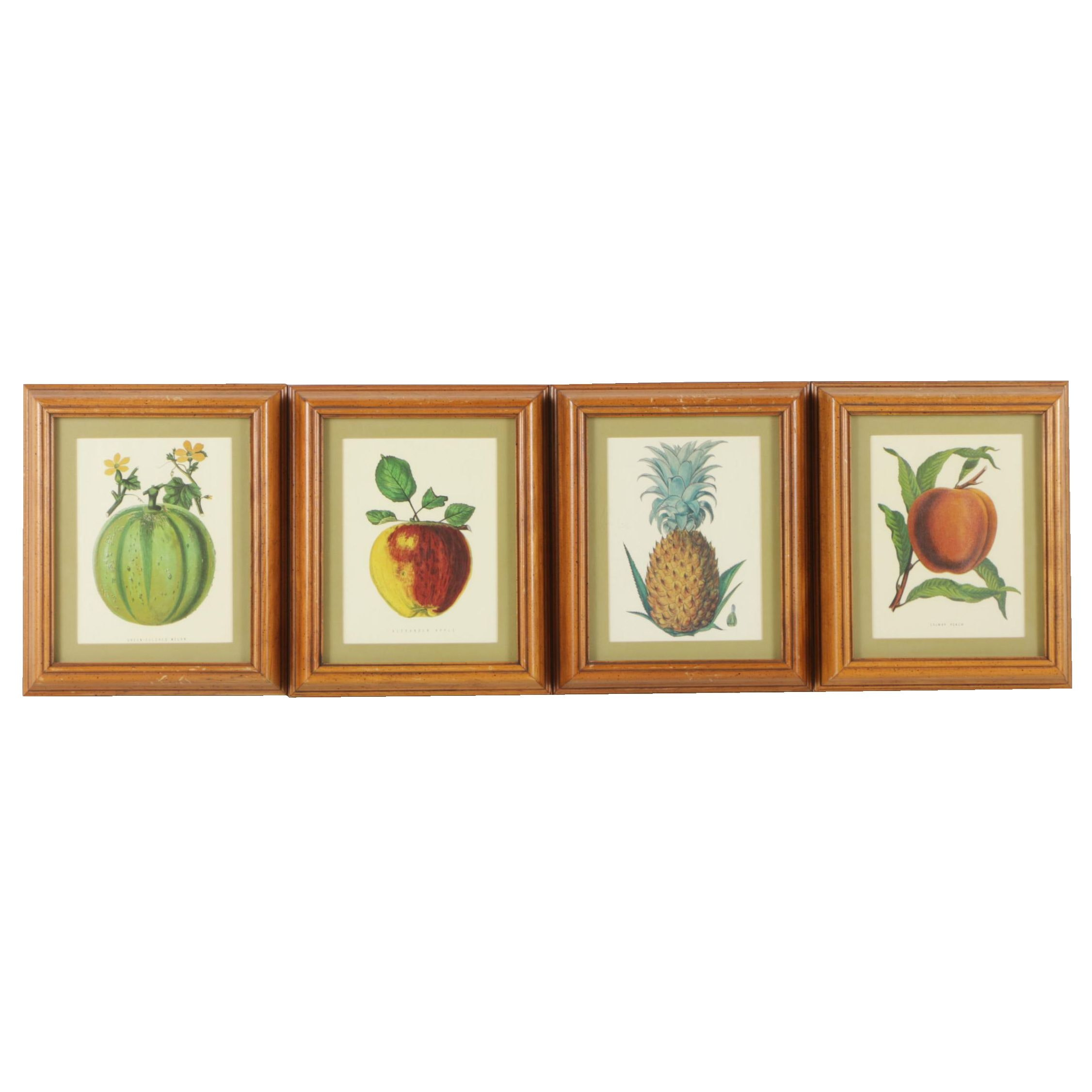 Offset Lithographs After William Mackenzie Fruit Studies
