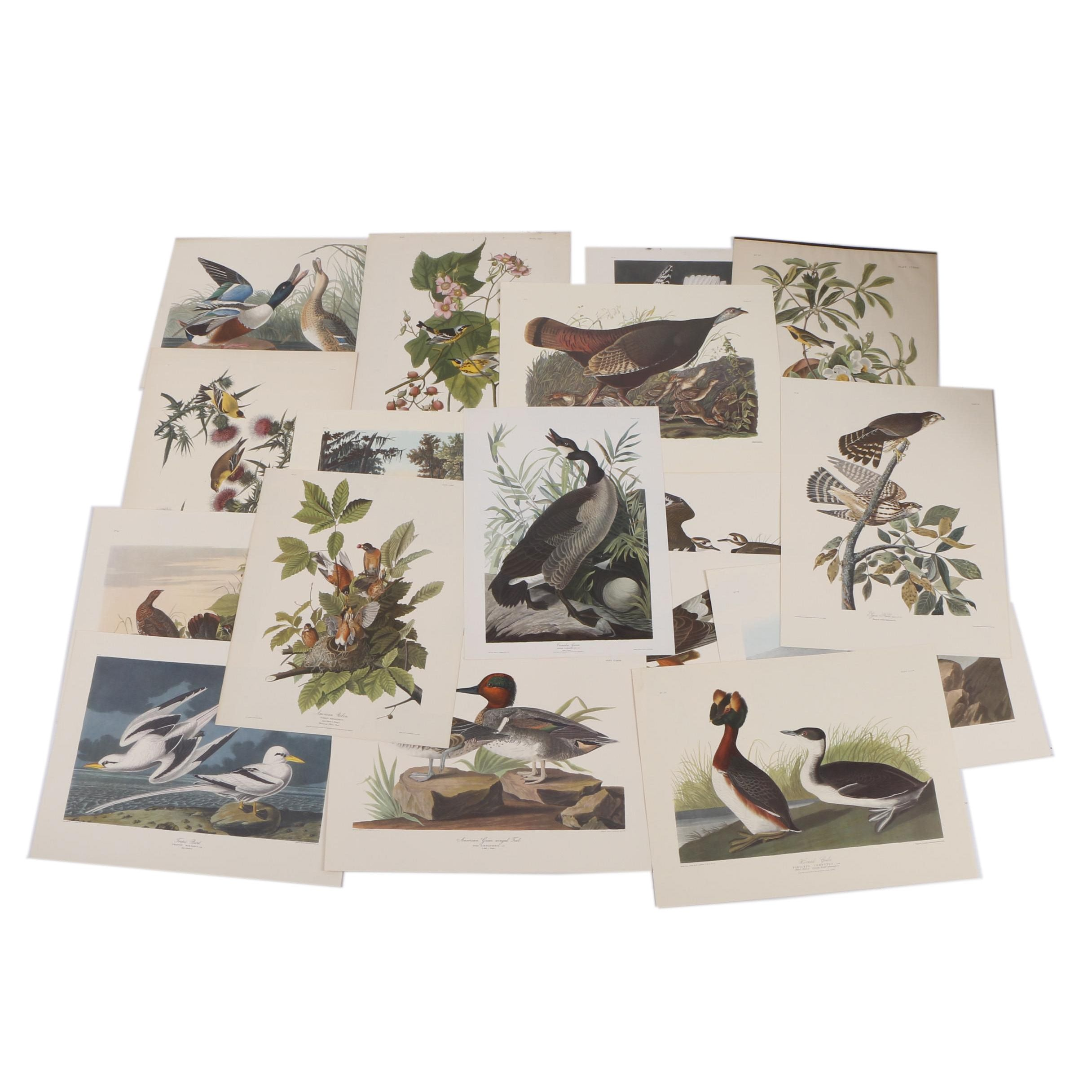Offset Lithographic Reproduction Prints After John J. Audubon