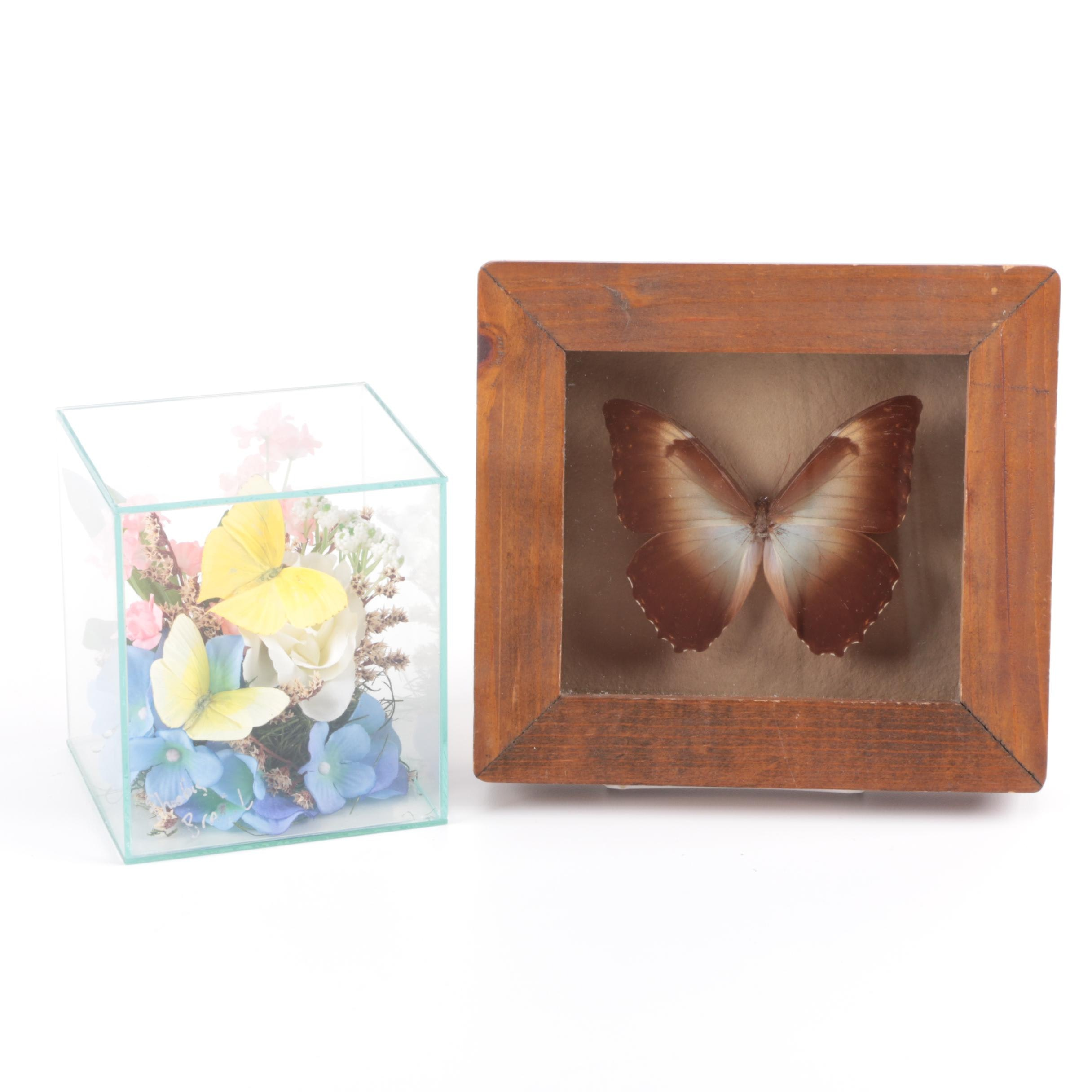 Framed Brown Butterfly Specimen with Yellow Butterfly Specimens in Glass Cube