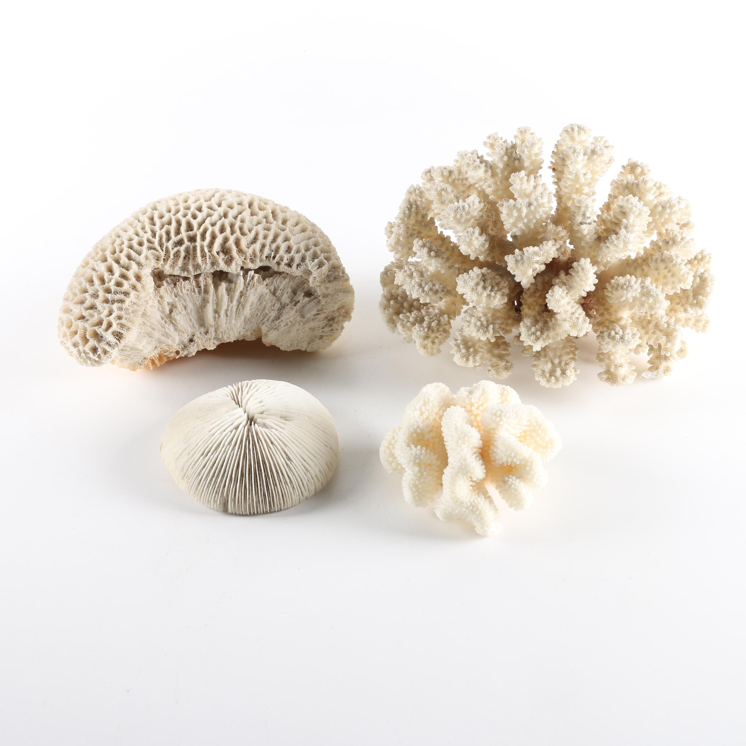 Recent Scleractinian Coral Specimens