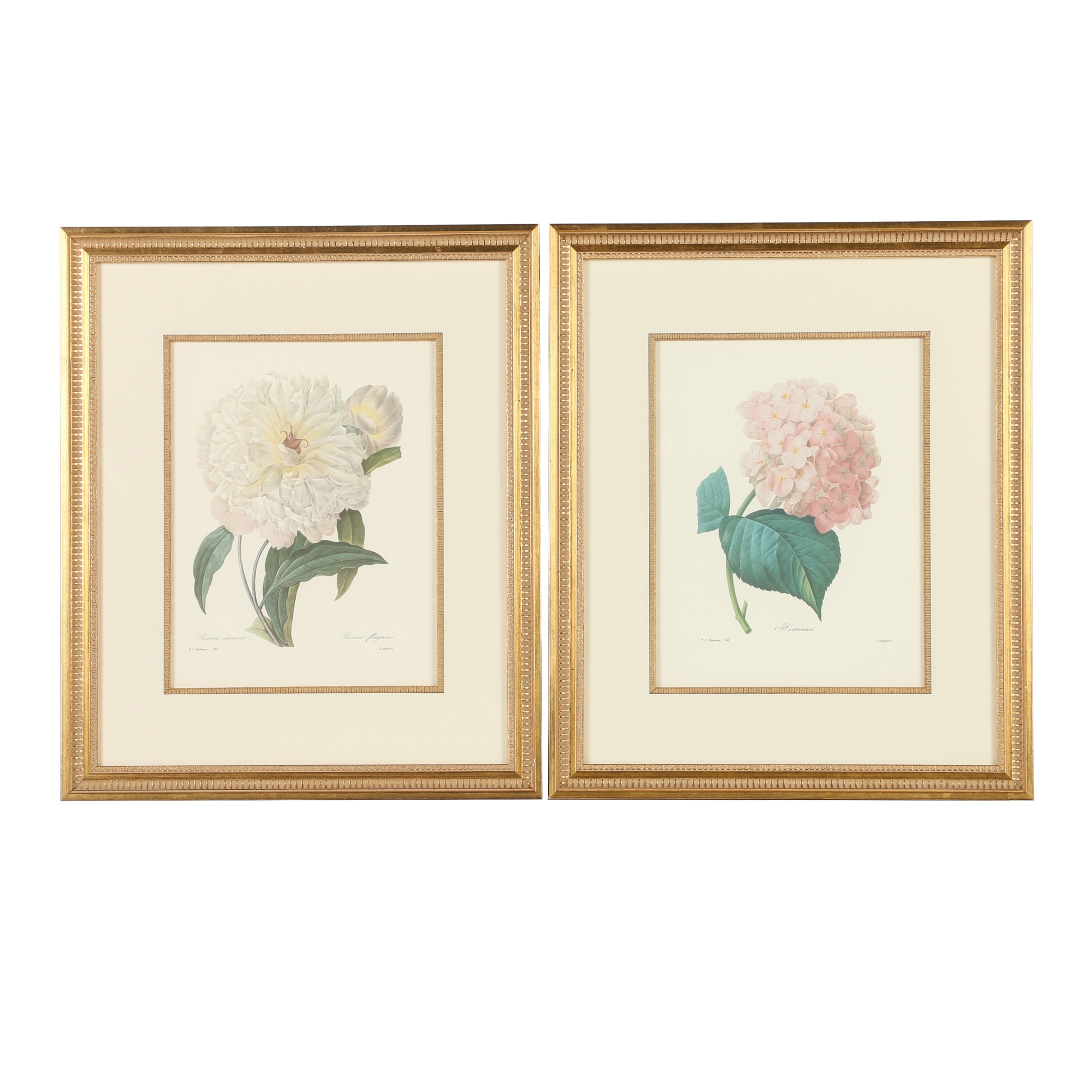 "Offset Lithographs After Pierre-Joseph Redouté Including ""Hortensia"""