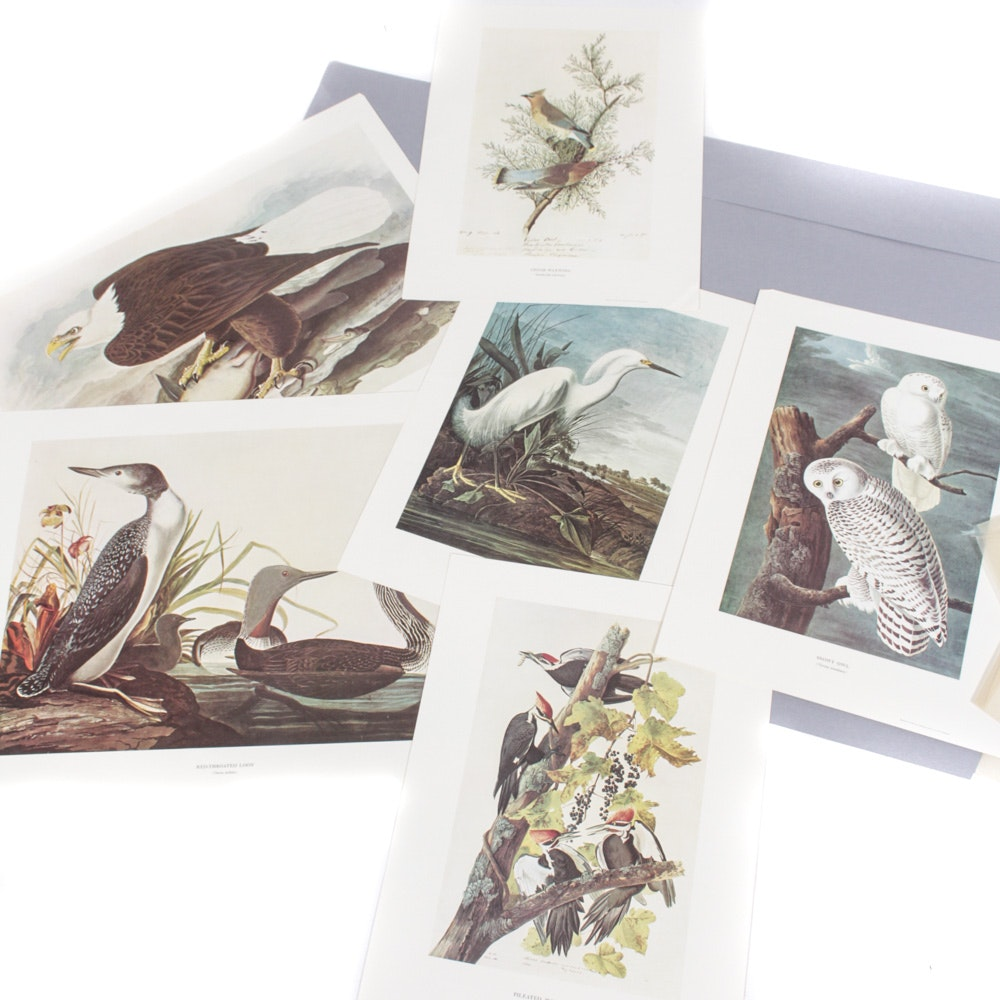 Vintage Offset Lithograph Bird Prints