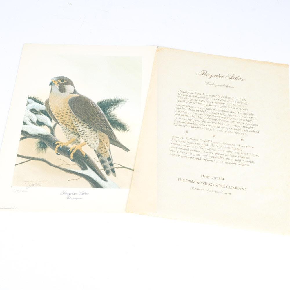 """1974 John A. Ruthven Offset Lithograph """"Peregrine Falcon"""""""