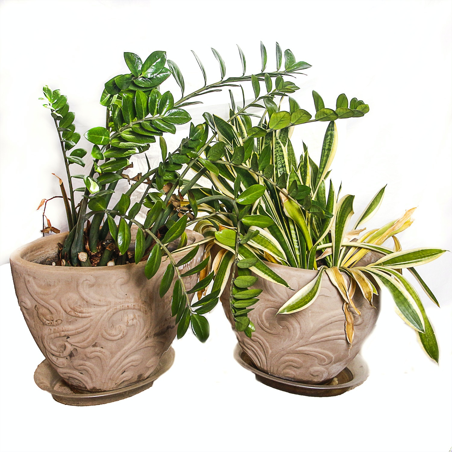 Terracotta Planters with Live Plants