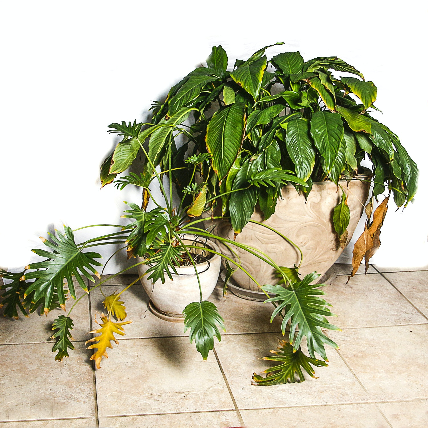 Tropical House Plants in Ceramic Pots
