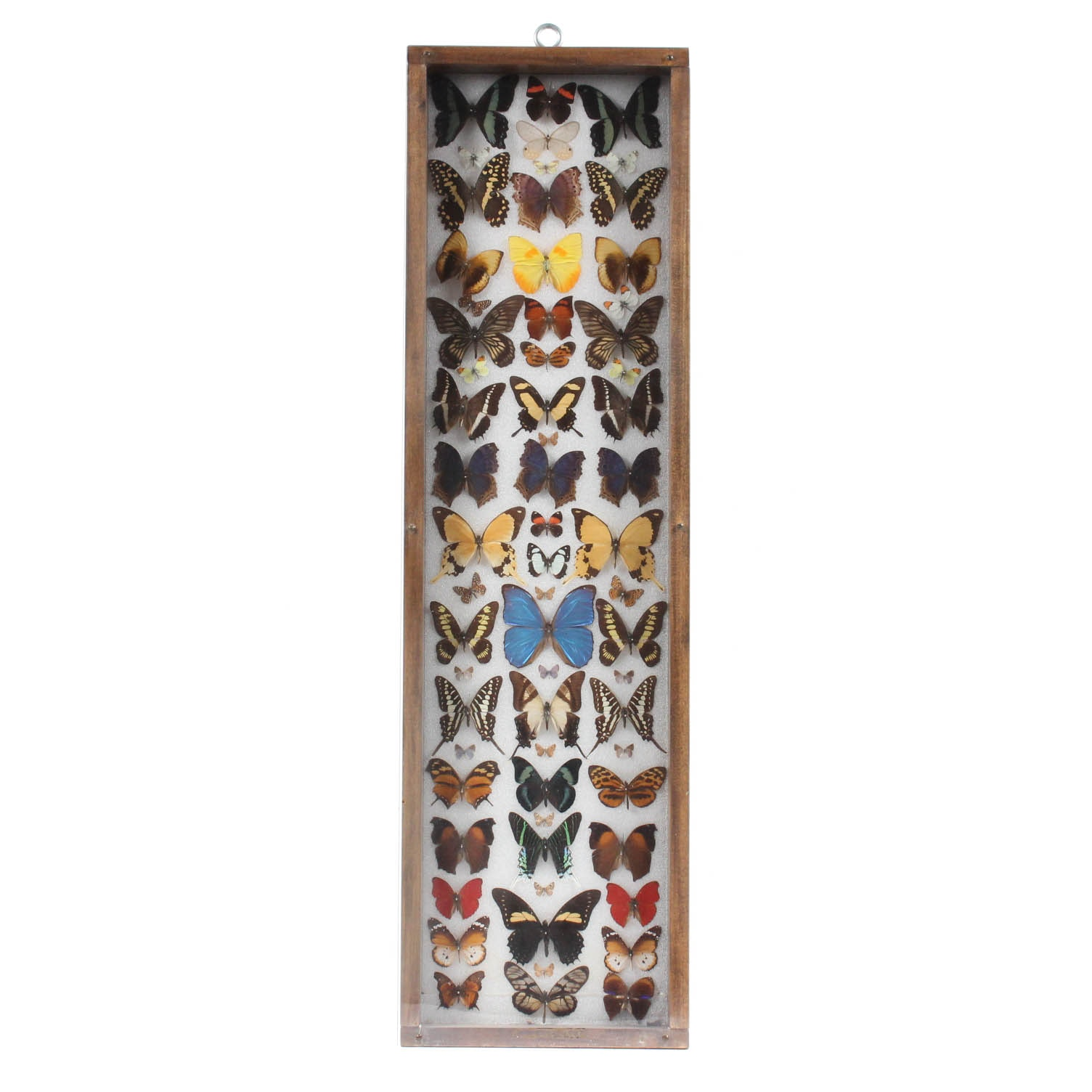 Framed Butterfly and Moth Specimens