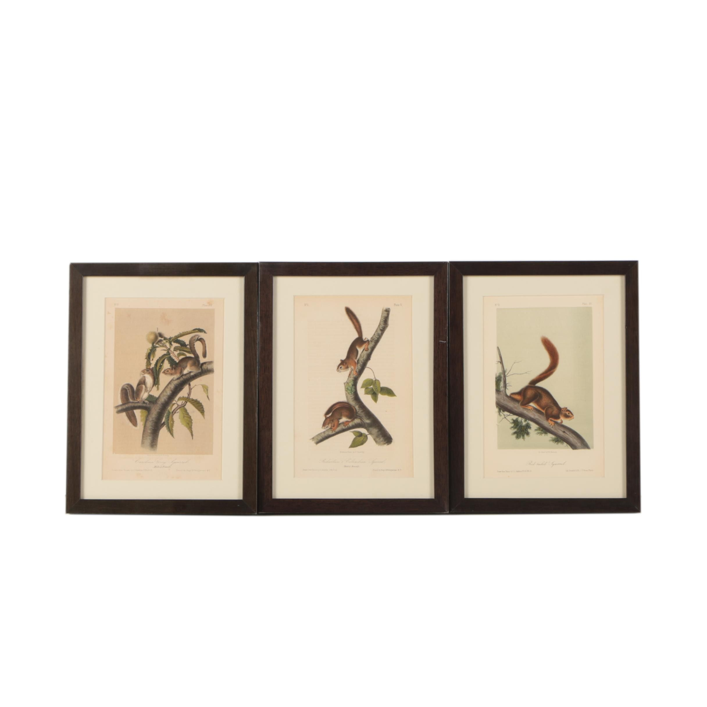 Three Color Lithographs
