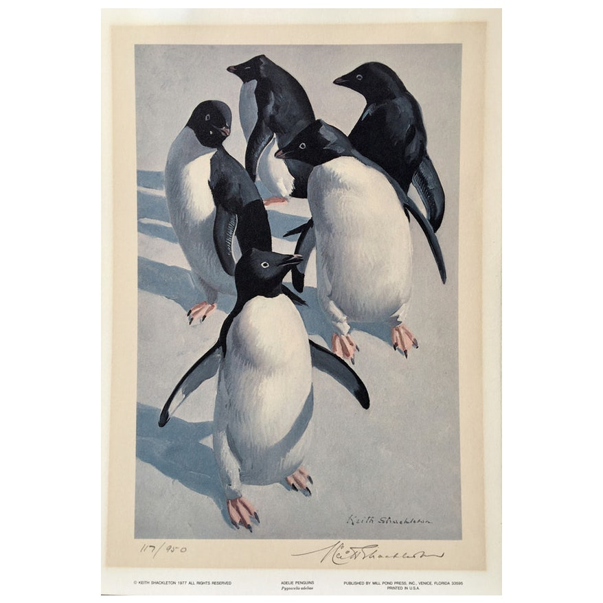 Adelie Penguins, 1977