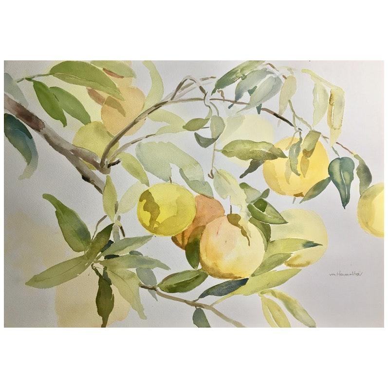 Study of Oranges by Barbara von Haunalter, 1990's