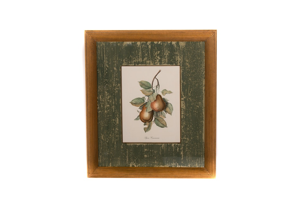 "Offset Lithographic Botanical Print ""Pyrus Communis"""