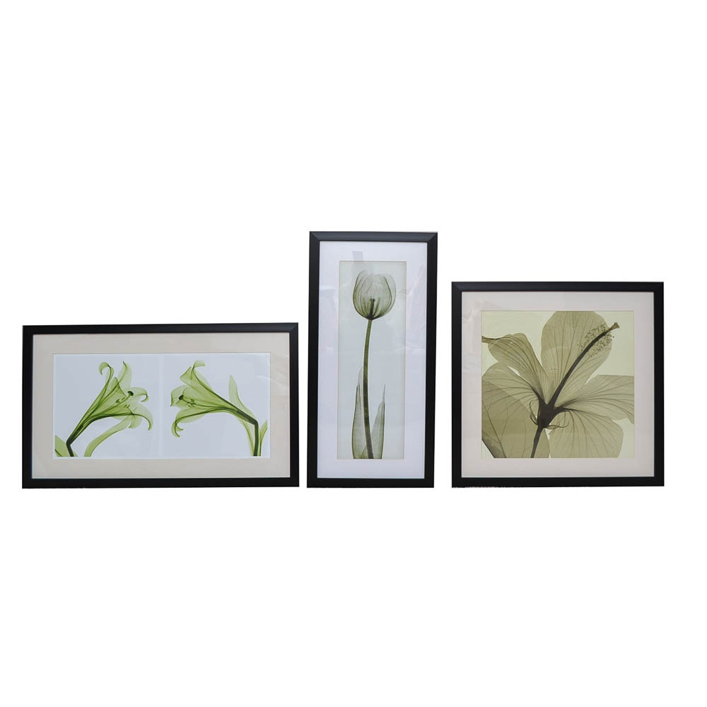Giclée Reproductions After Steven N. Meyers Floral Photographs