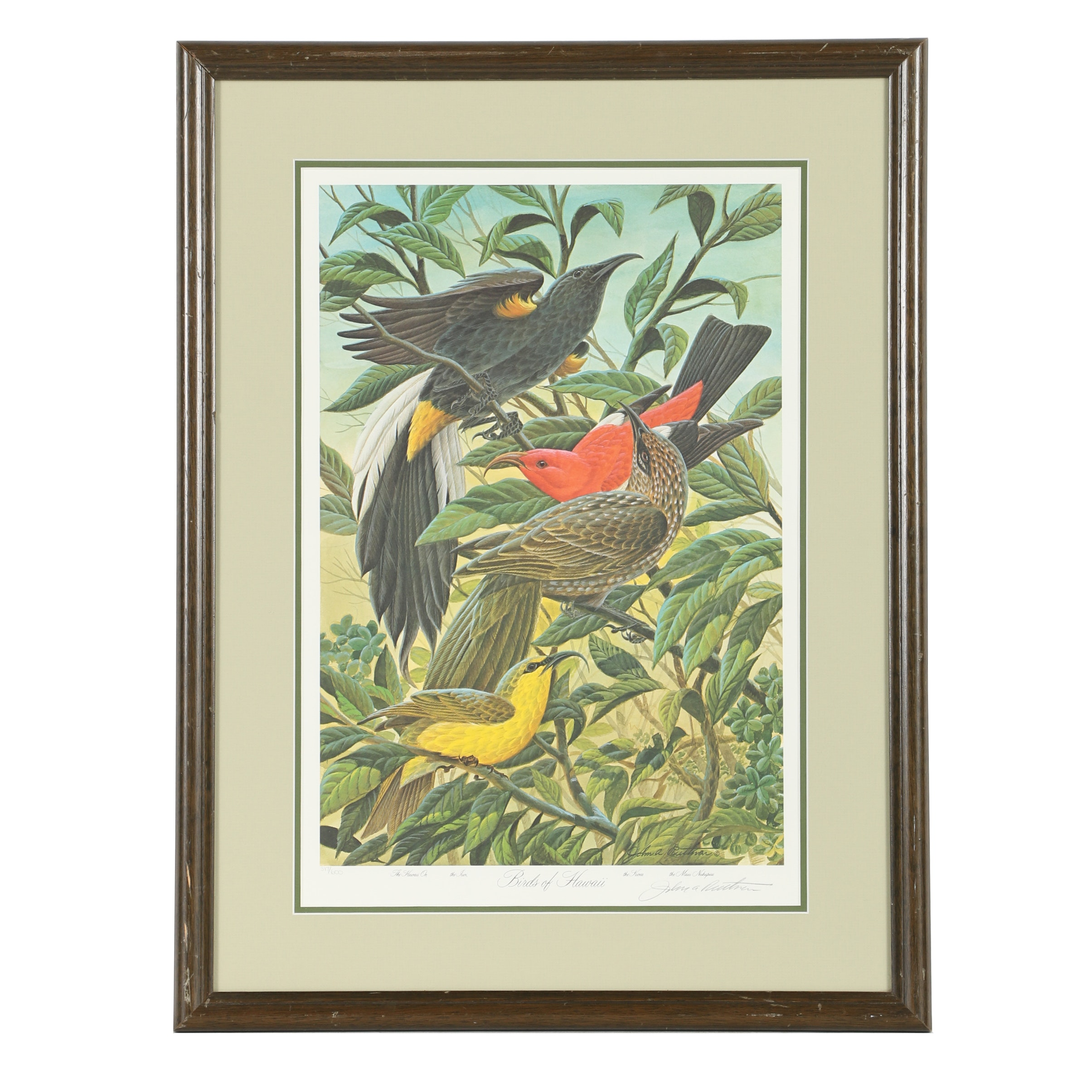 "John Ruthven Limited Edition Signed Offset Lithograph ""Birds Of Hawaii"""