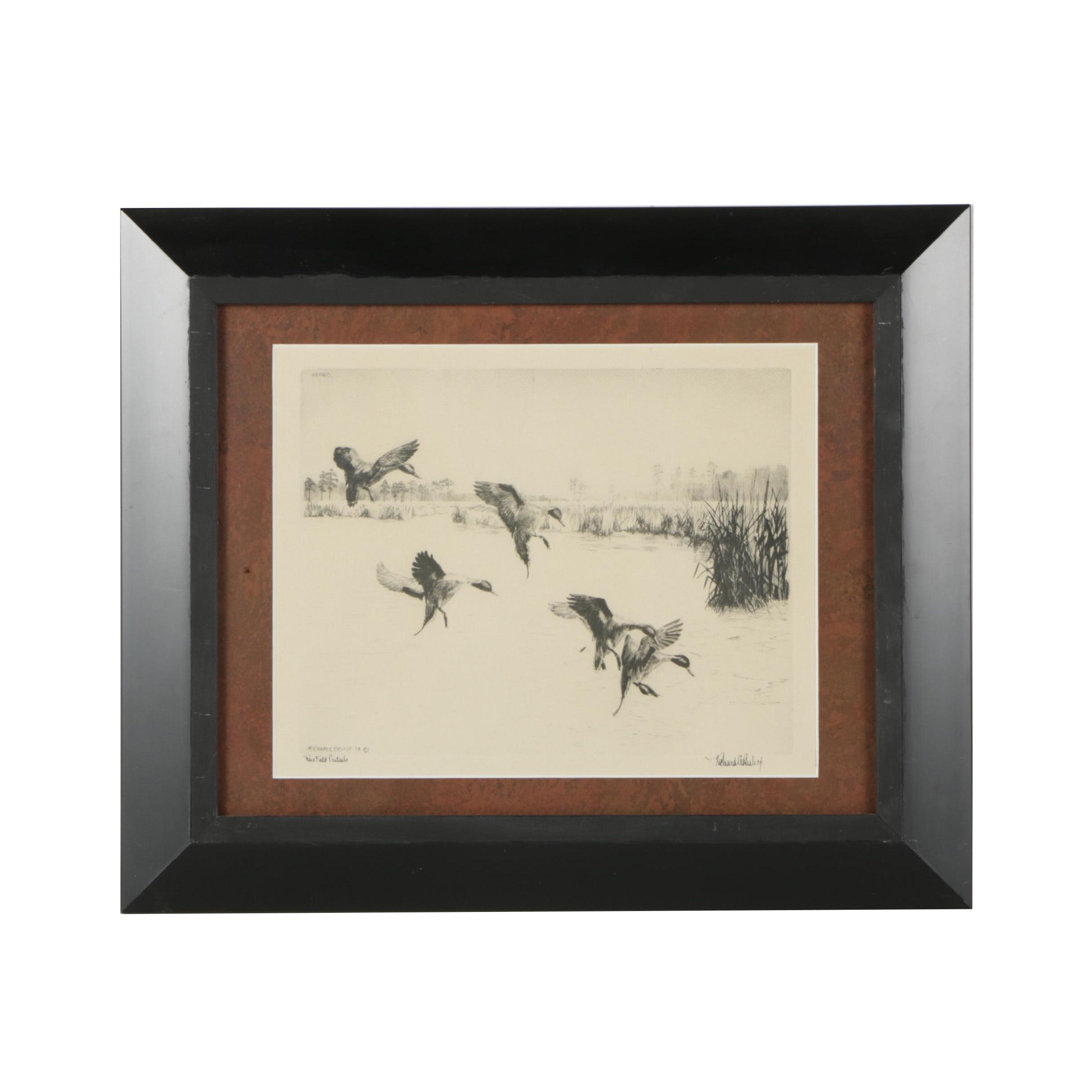 """Lithograph After Richard E. Bishop """"Rice Field Pintails"""""""