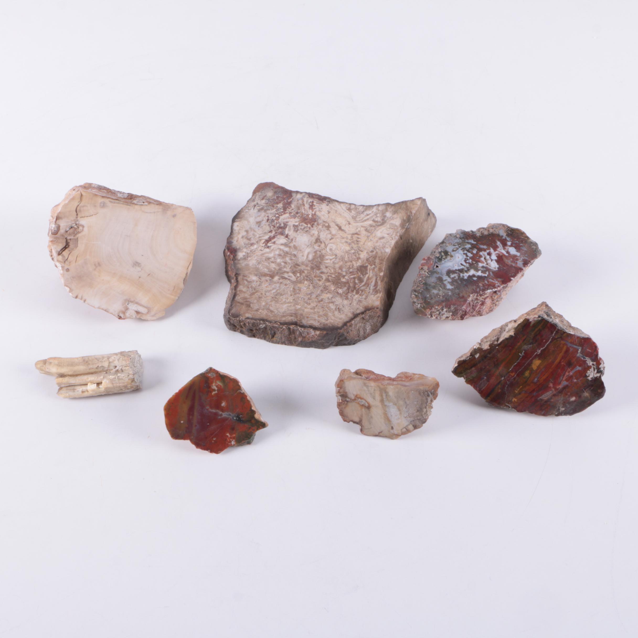 Paleontologic Specimens