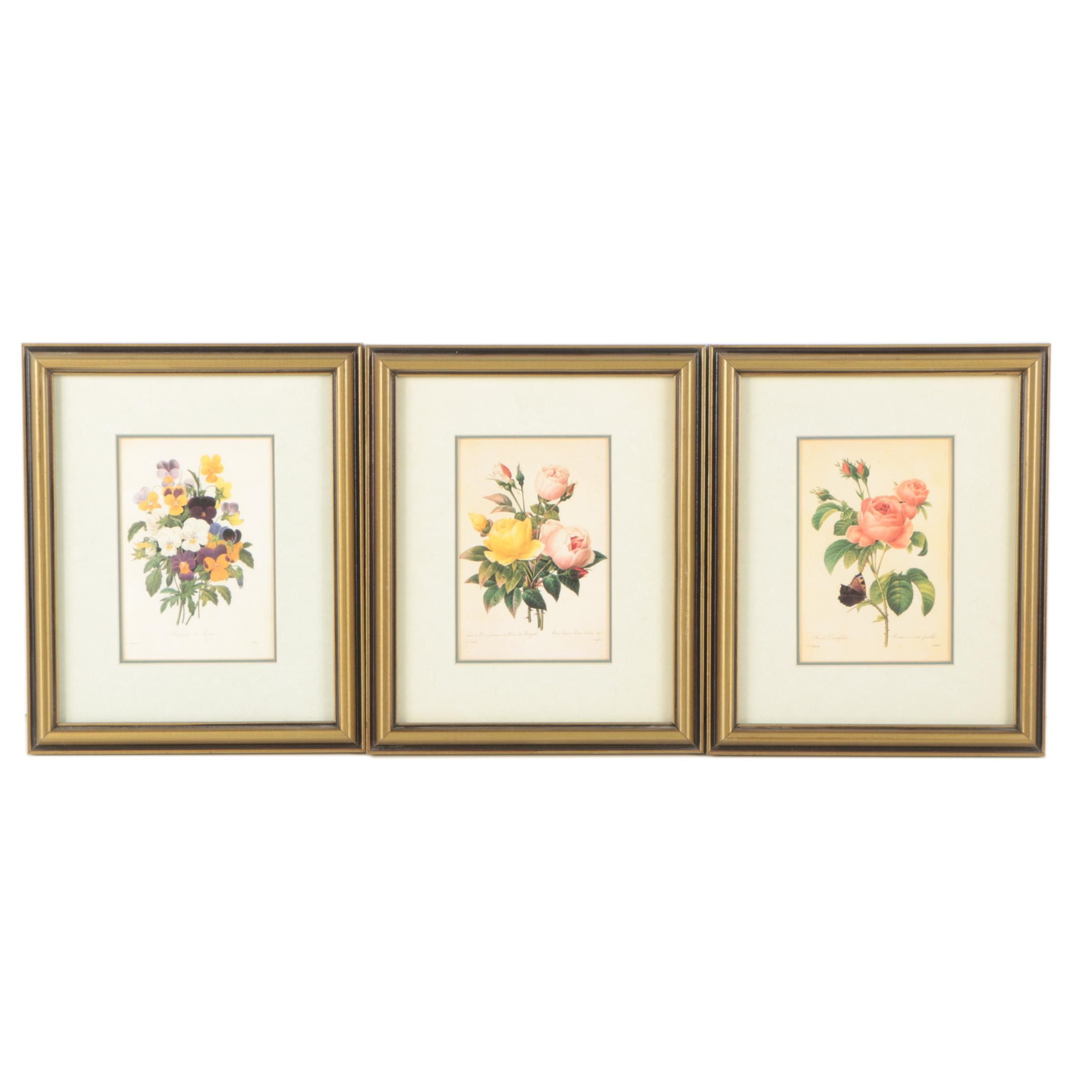 Offset Lithographic Reproduction Prints of Botanical Illustrations