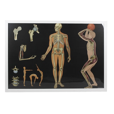 Offset Lithograph Poster of Human Anatomy