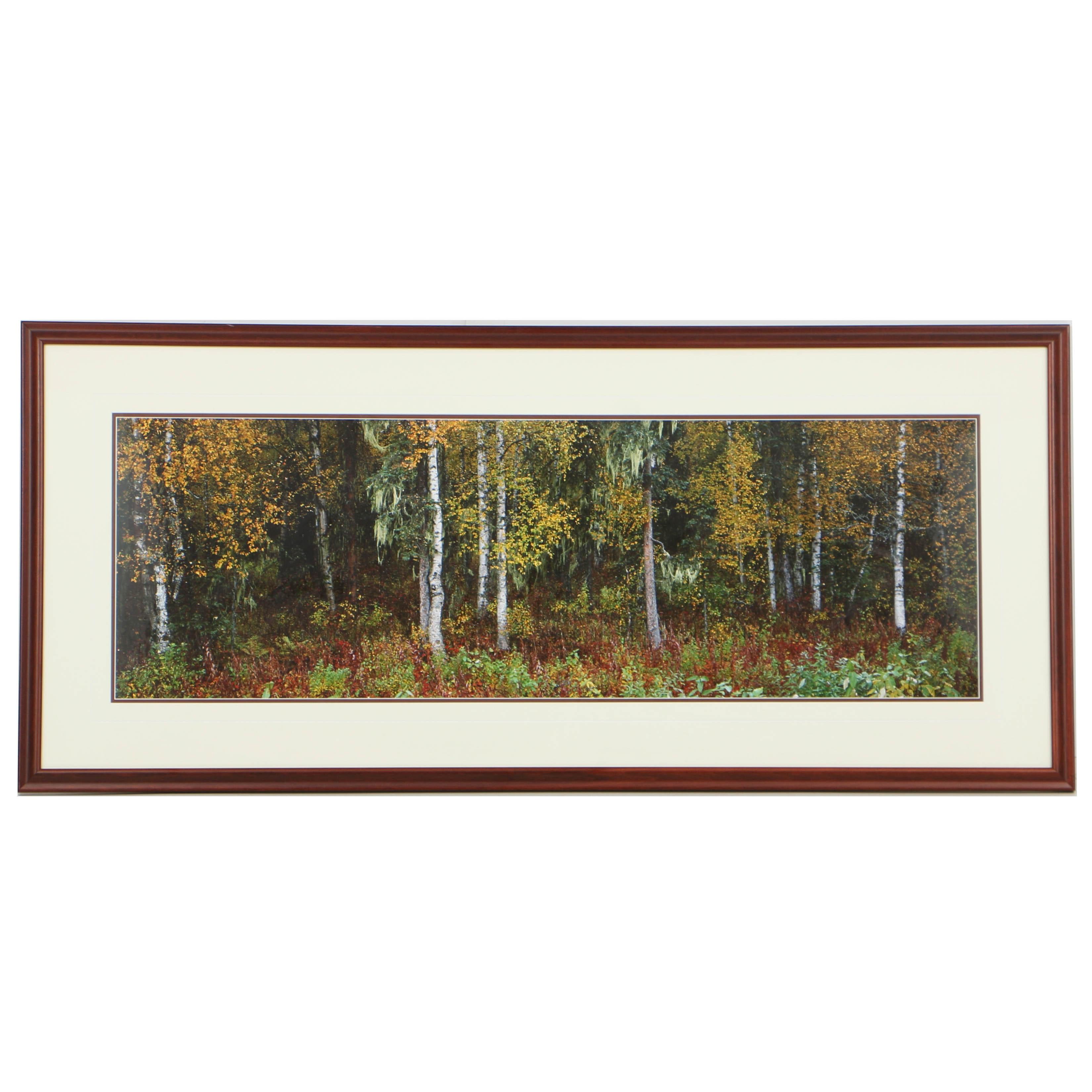 Thomas D. Mangelsen Panoramic Color Photograph of a Forest Landscape