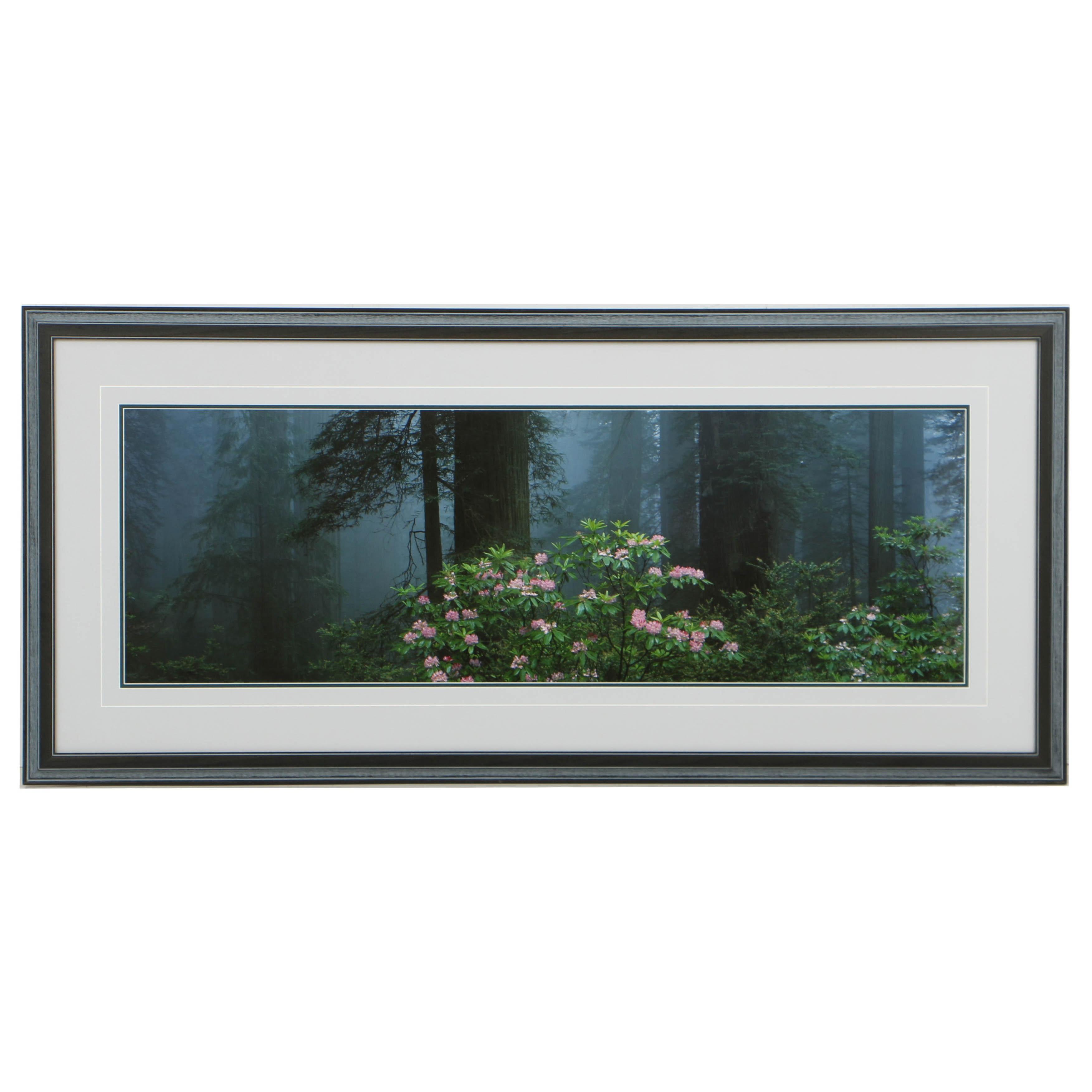 Thomas D. Mangelsen Panoramic Color Photograph of Forest Landscape