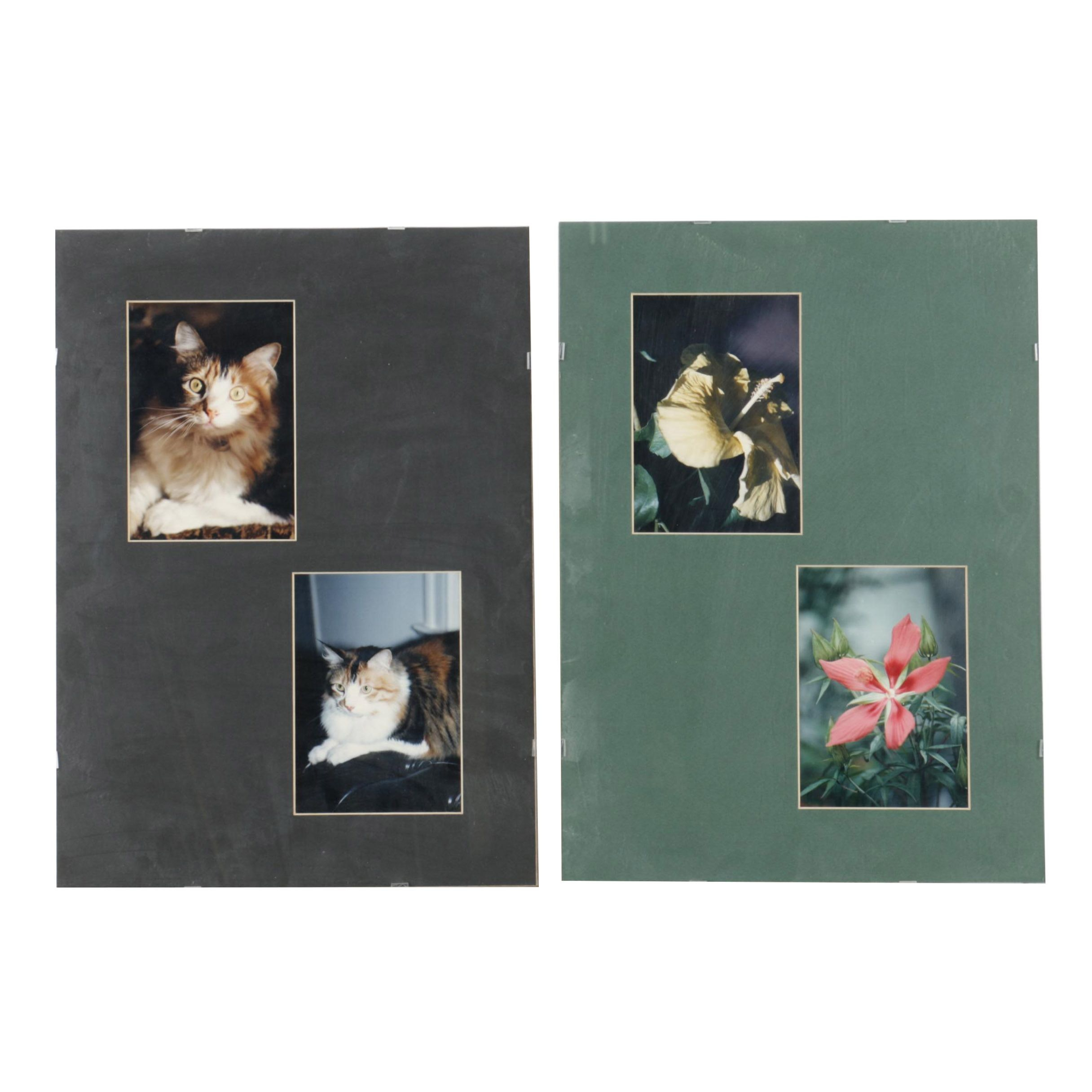 Color Photographs of Cats and Flowers