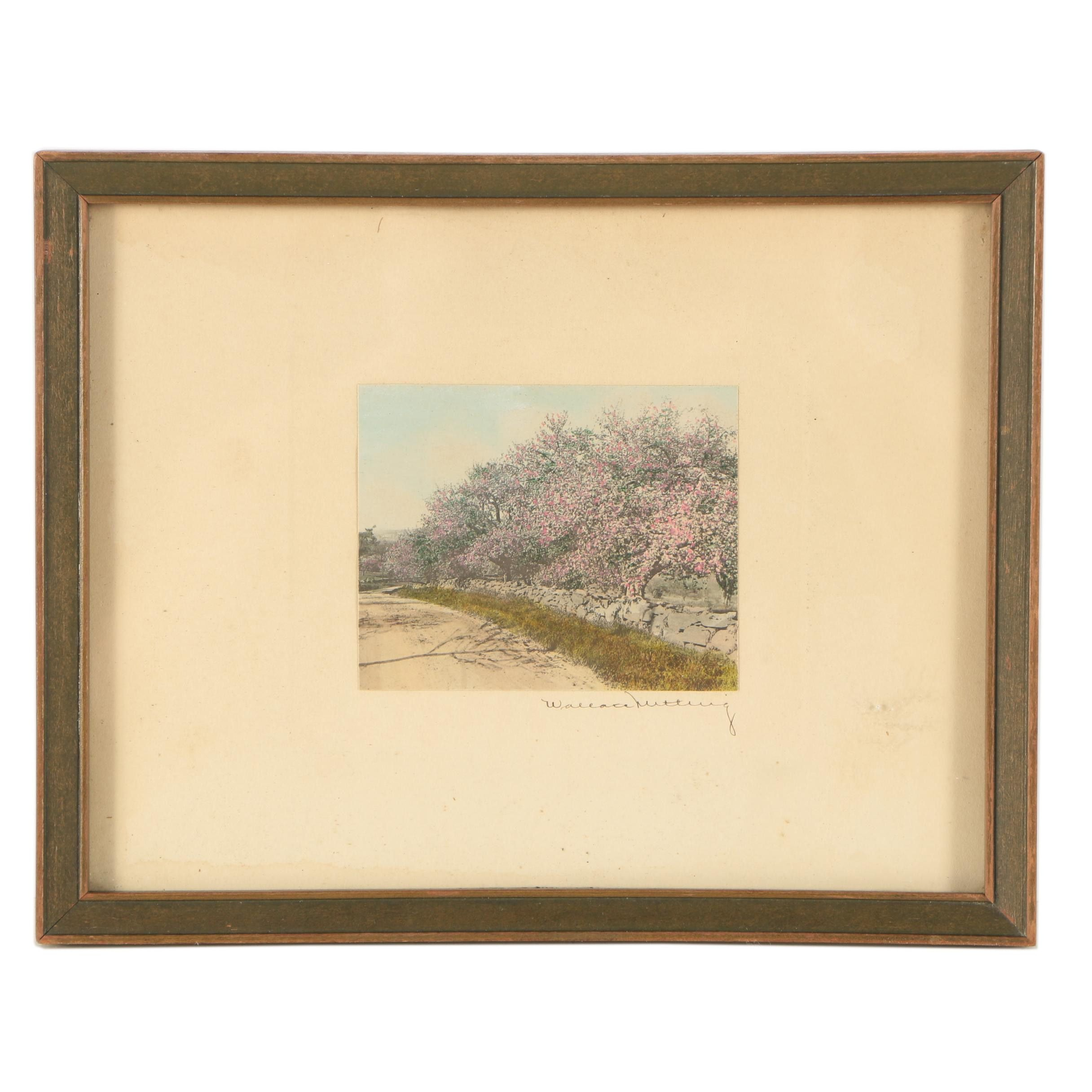 Wallace Nutting Hand-Colored Photograph of Cherry Blossoms