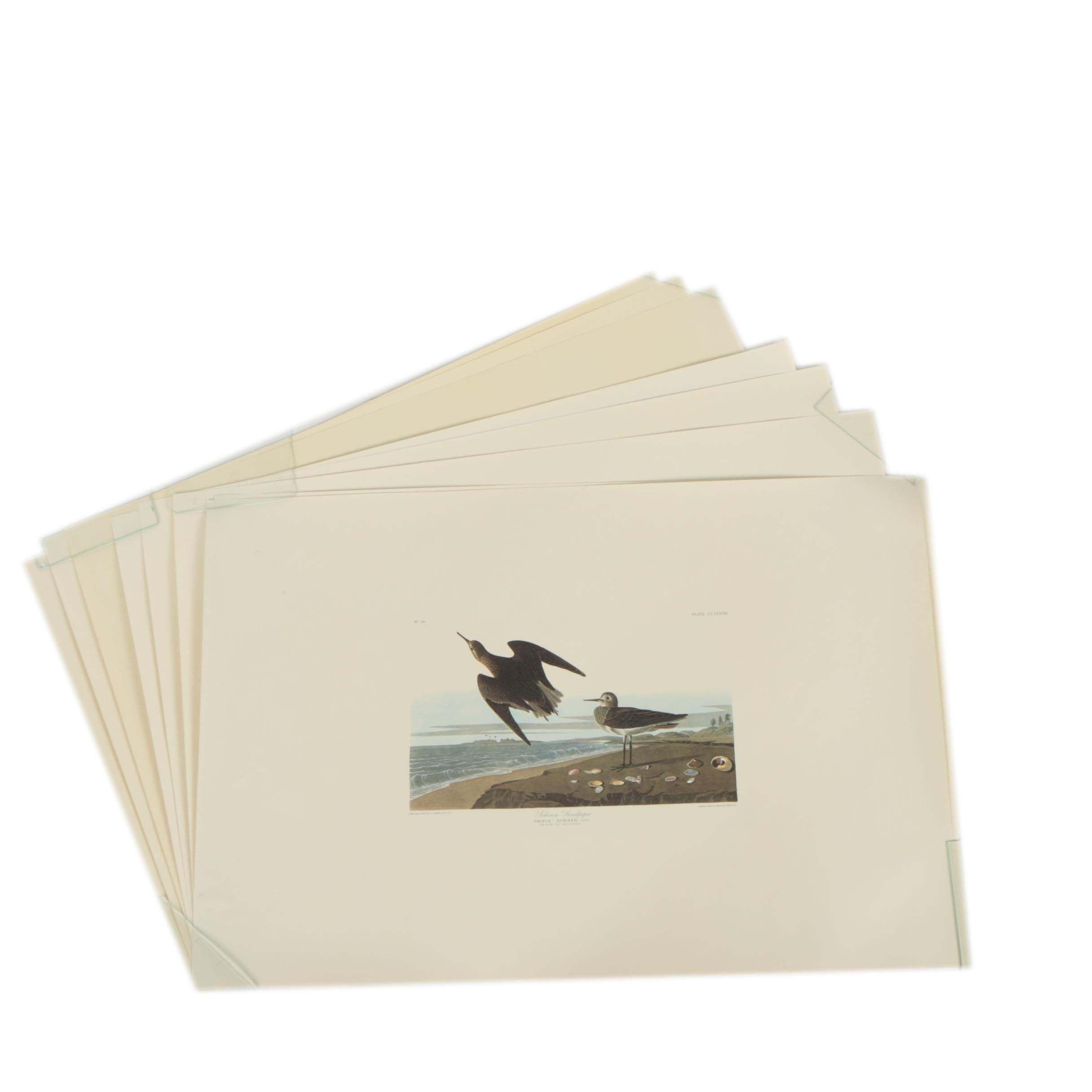 Offset Lithographs After John James Audubon's Illustrations of Birds
