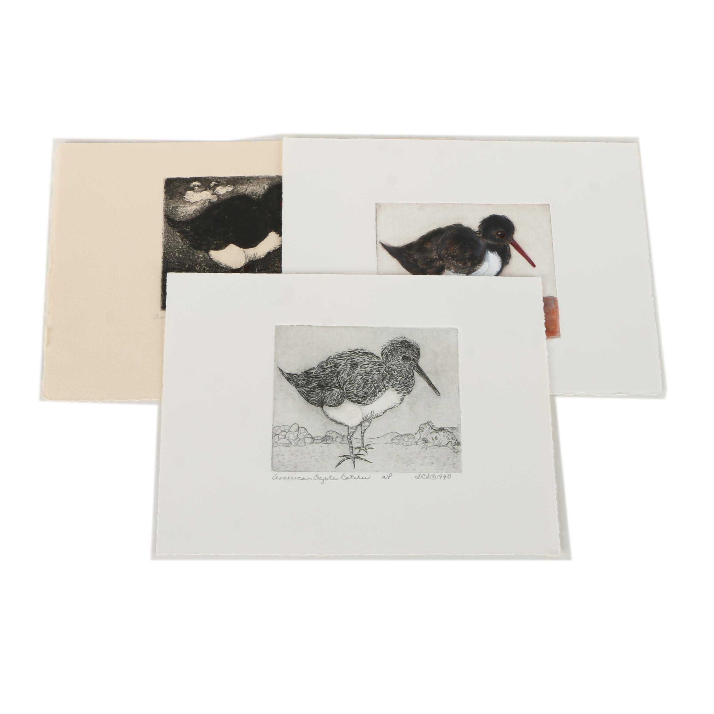 "Susan Connor Steinberg Embellished Etchings ""American Oystercatcher"""