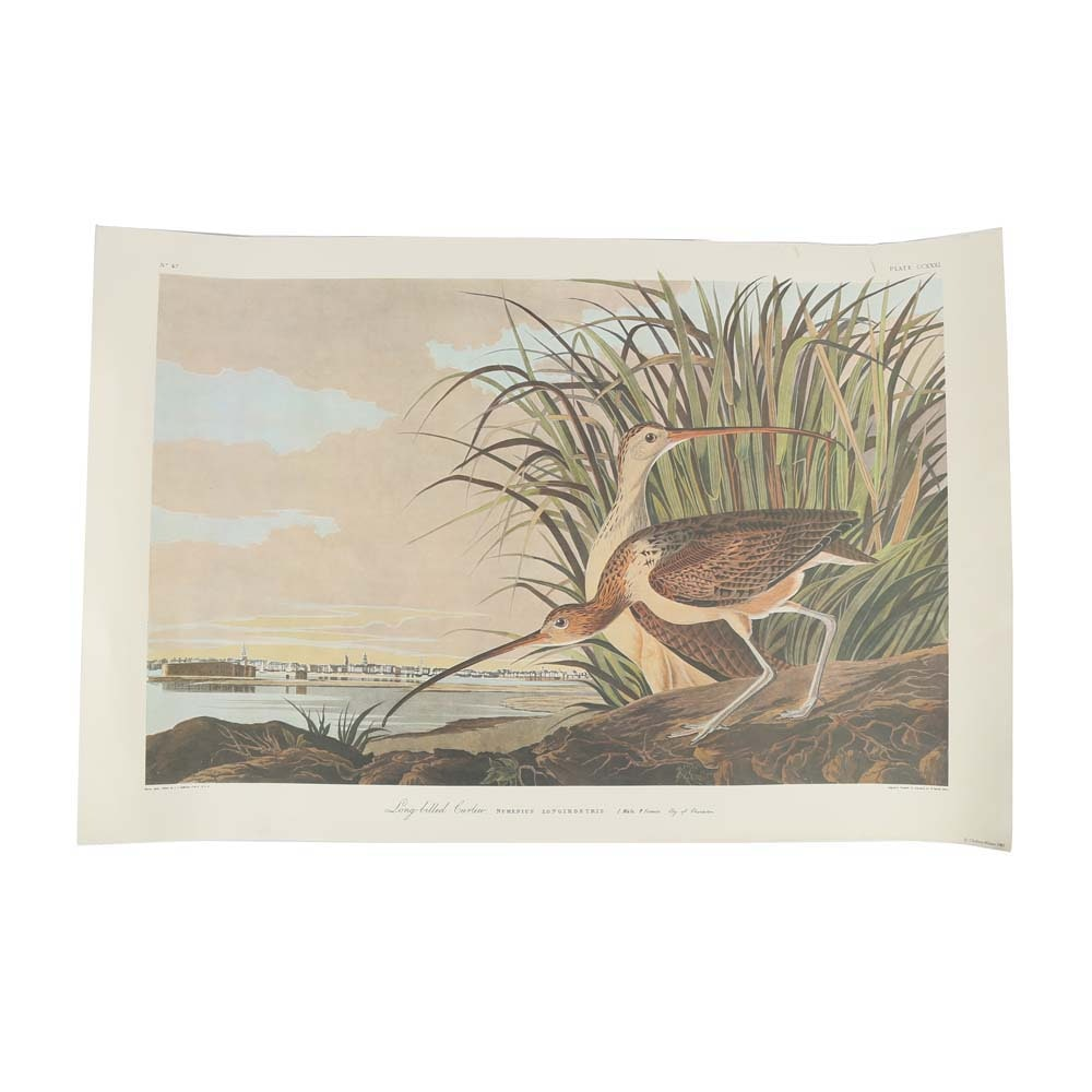 "After John James Audubon Offset Lithograph ""Long-Billed Curlew"""