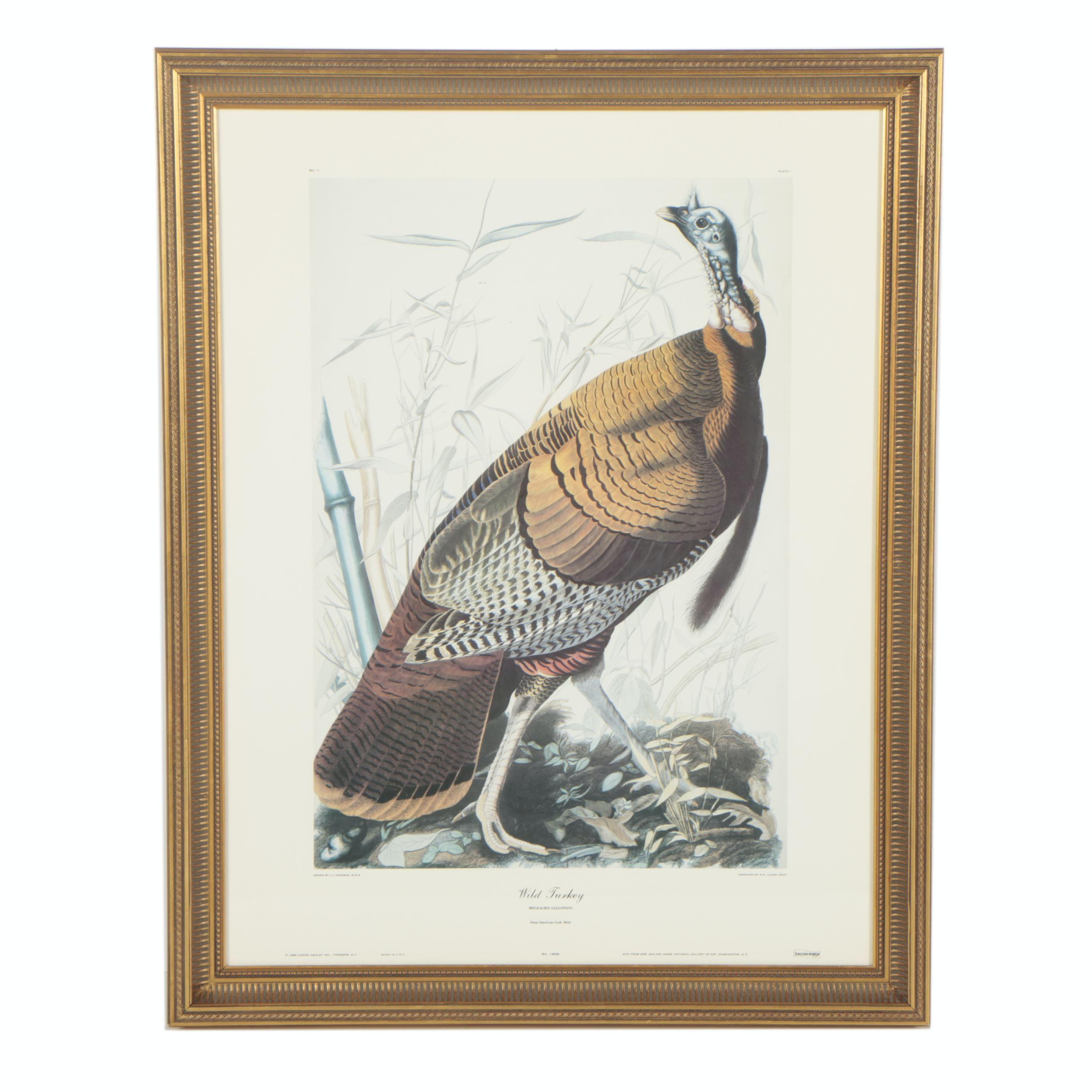 """Offset Lithograph After J.J. Audubon """"Wild Turkey"""""""