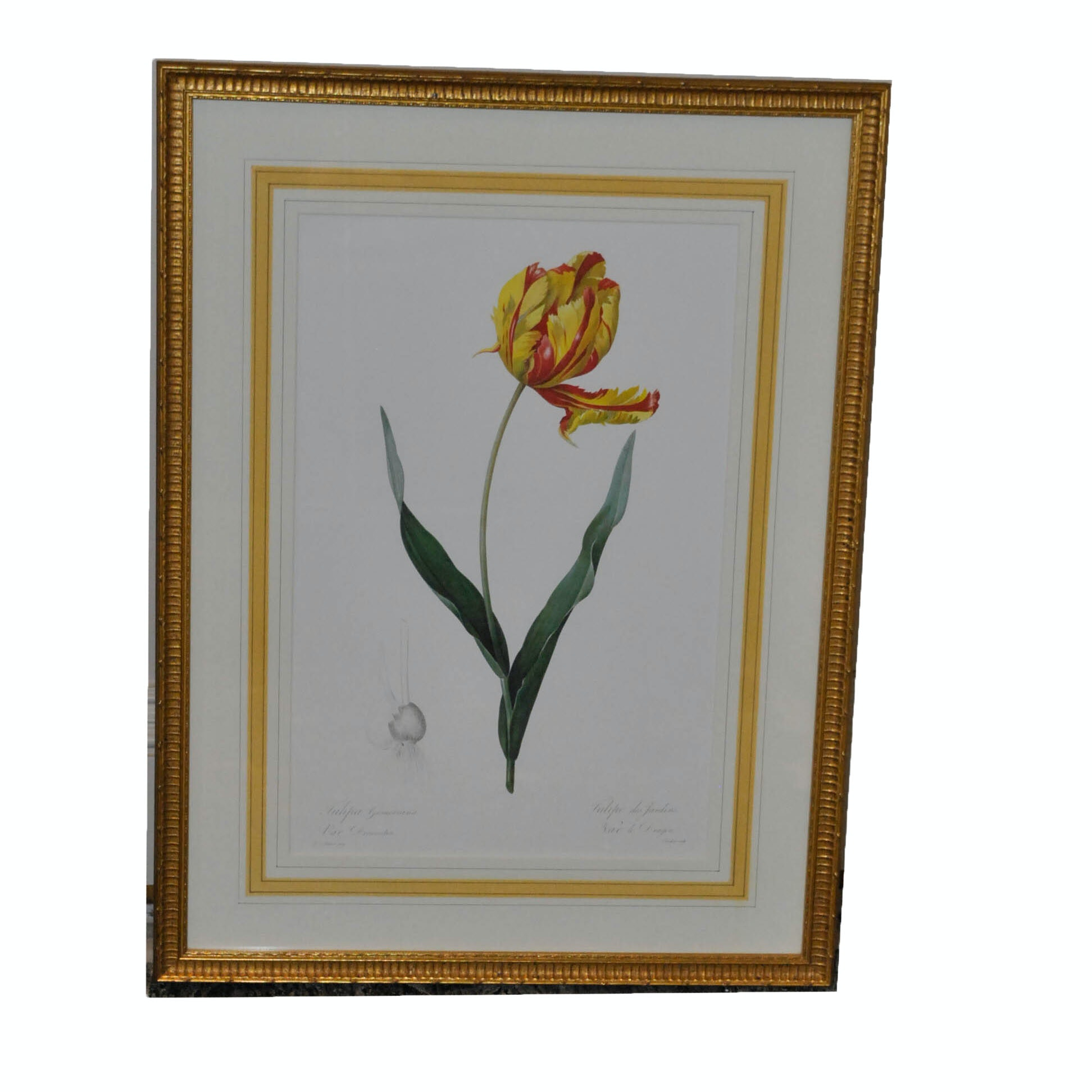 Offset Lithograph After Pierre-Joseph Redouté of a Tulip