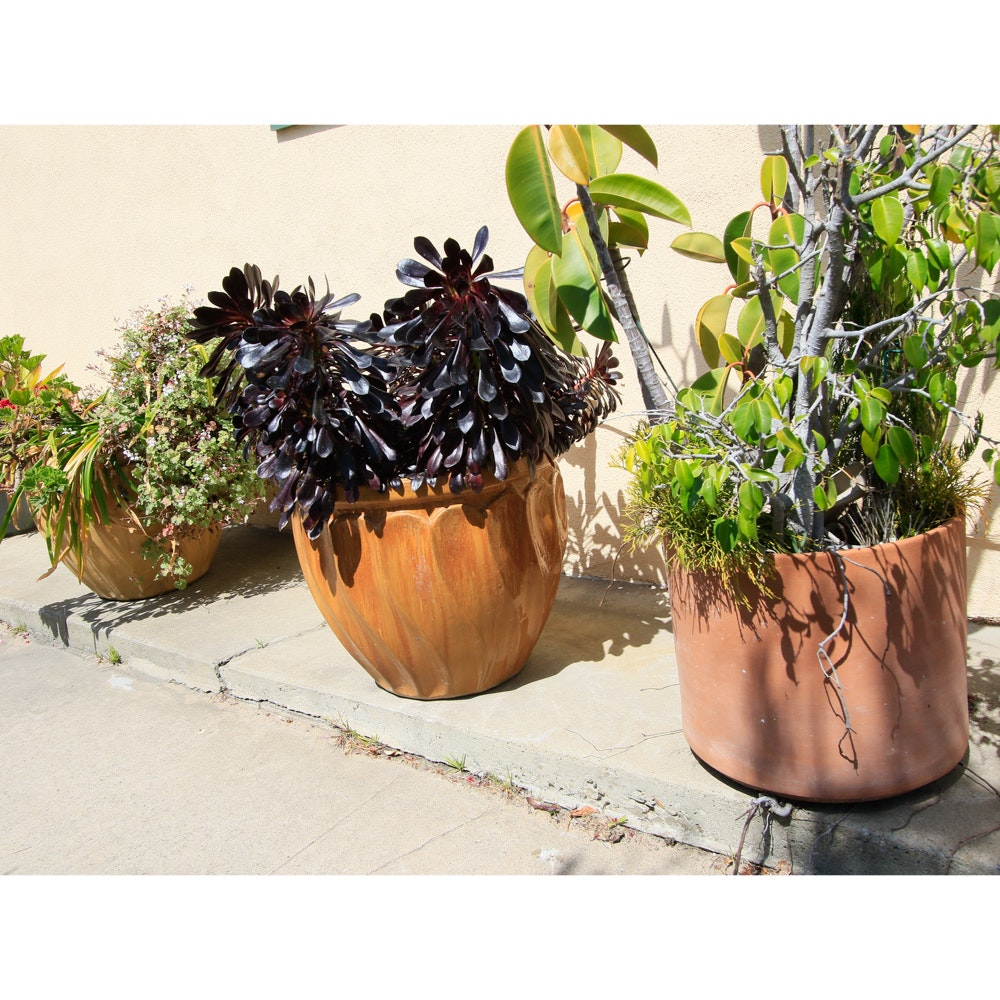 Decorative Outdoor Plants with Stone Planters