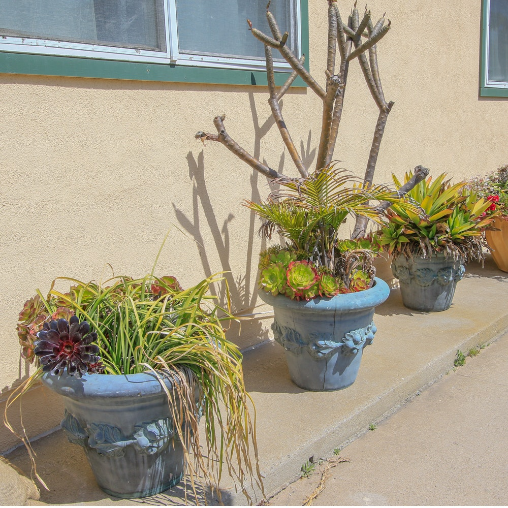 Outdoor Plants Including Succulents