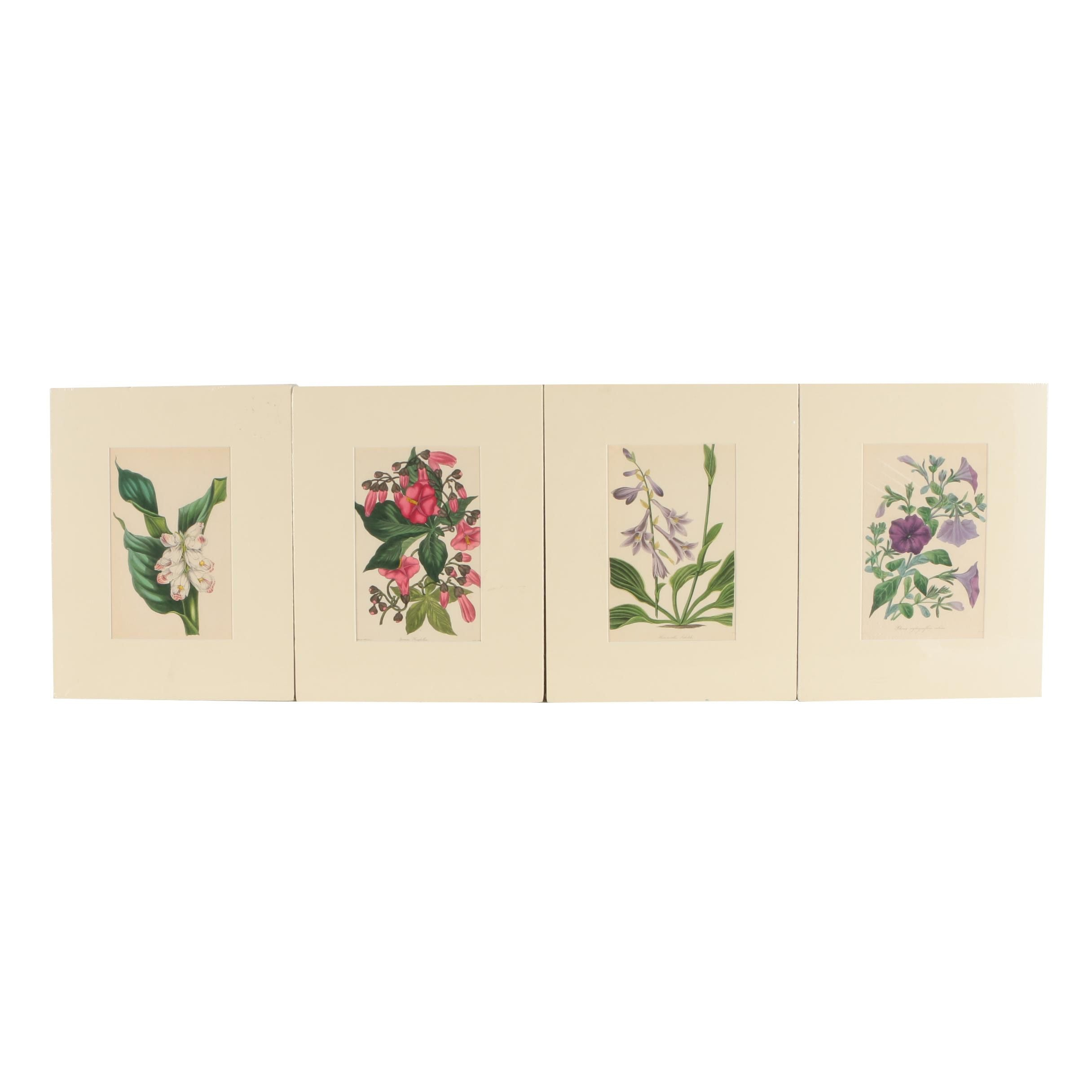 """Antique Lithographs From """"Paxton's Magazine of Botany"""""""