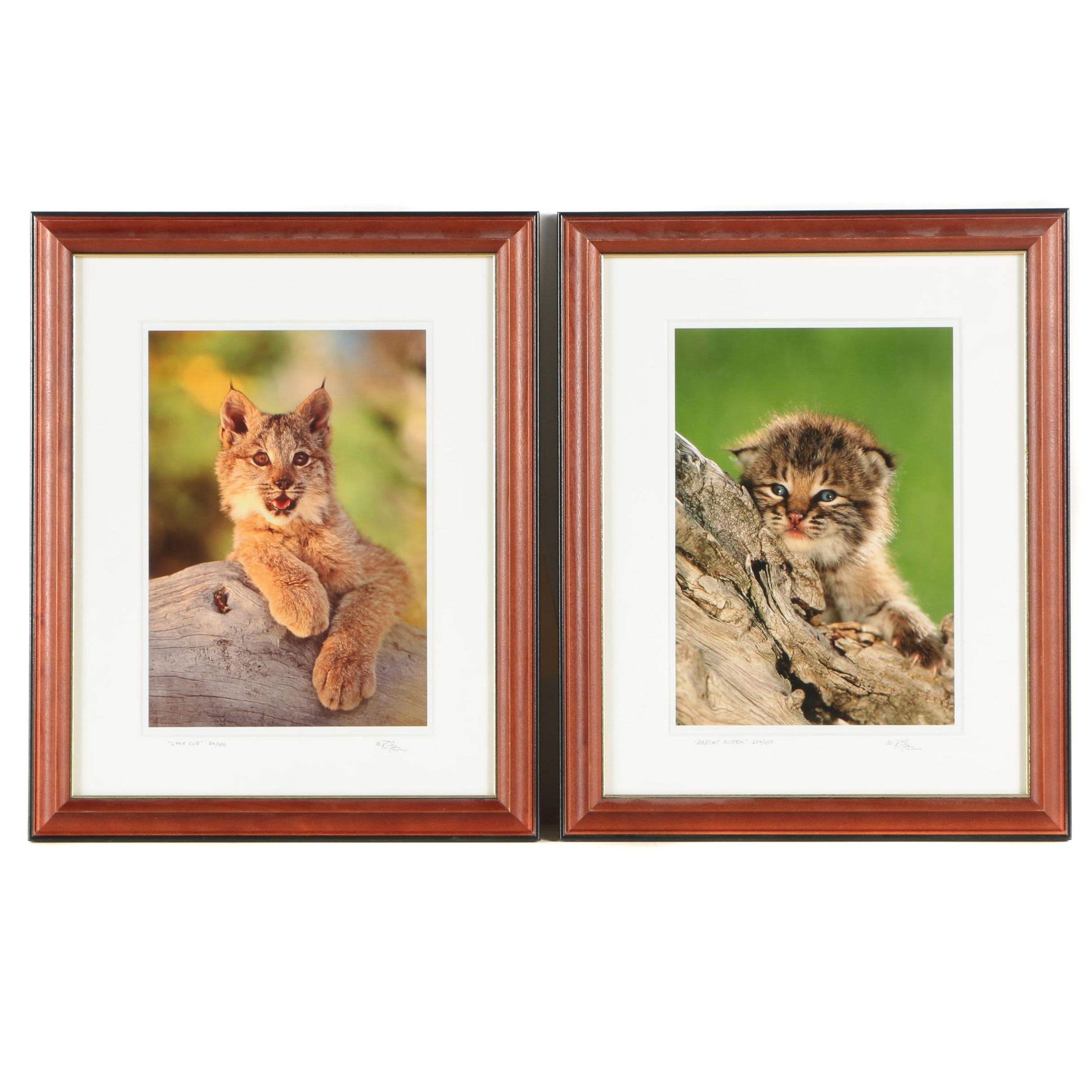Randy Napier Limited Edition Digital Prints of Cats