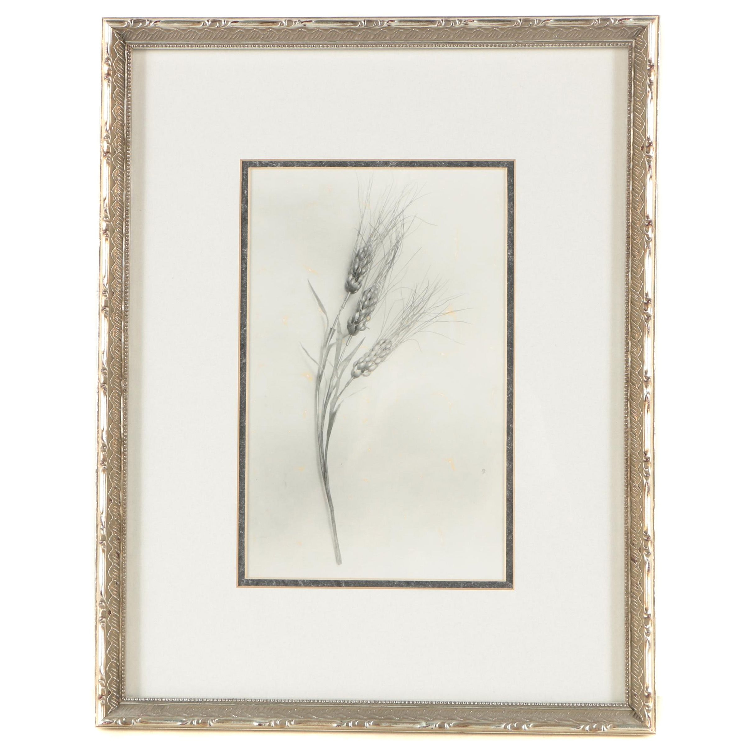 Black and White Photograph of Wheat