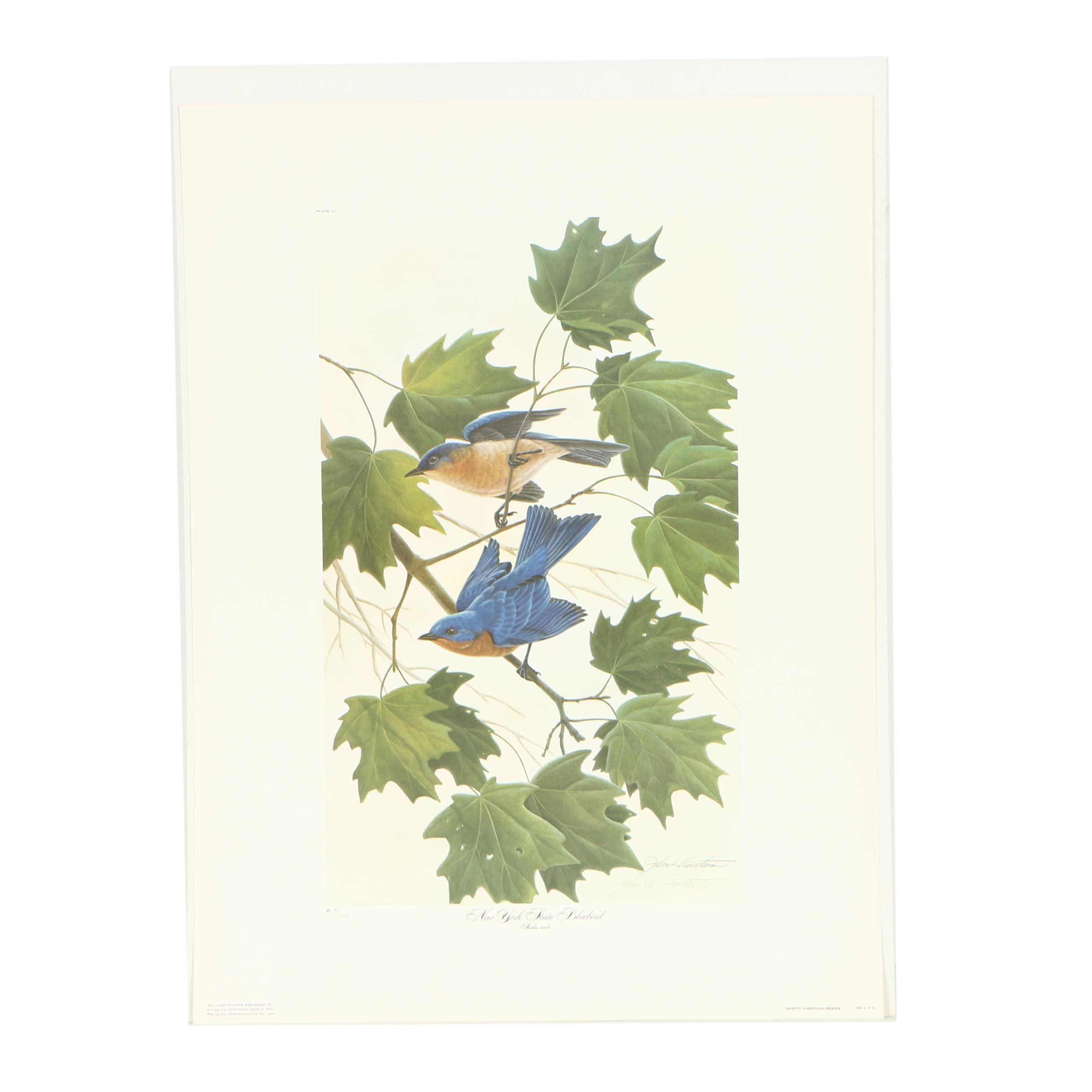 "John Ruthven Signed Limited Edition Offset Lithograph ""New York State Bluebird"""