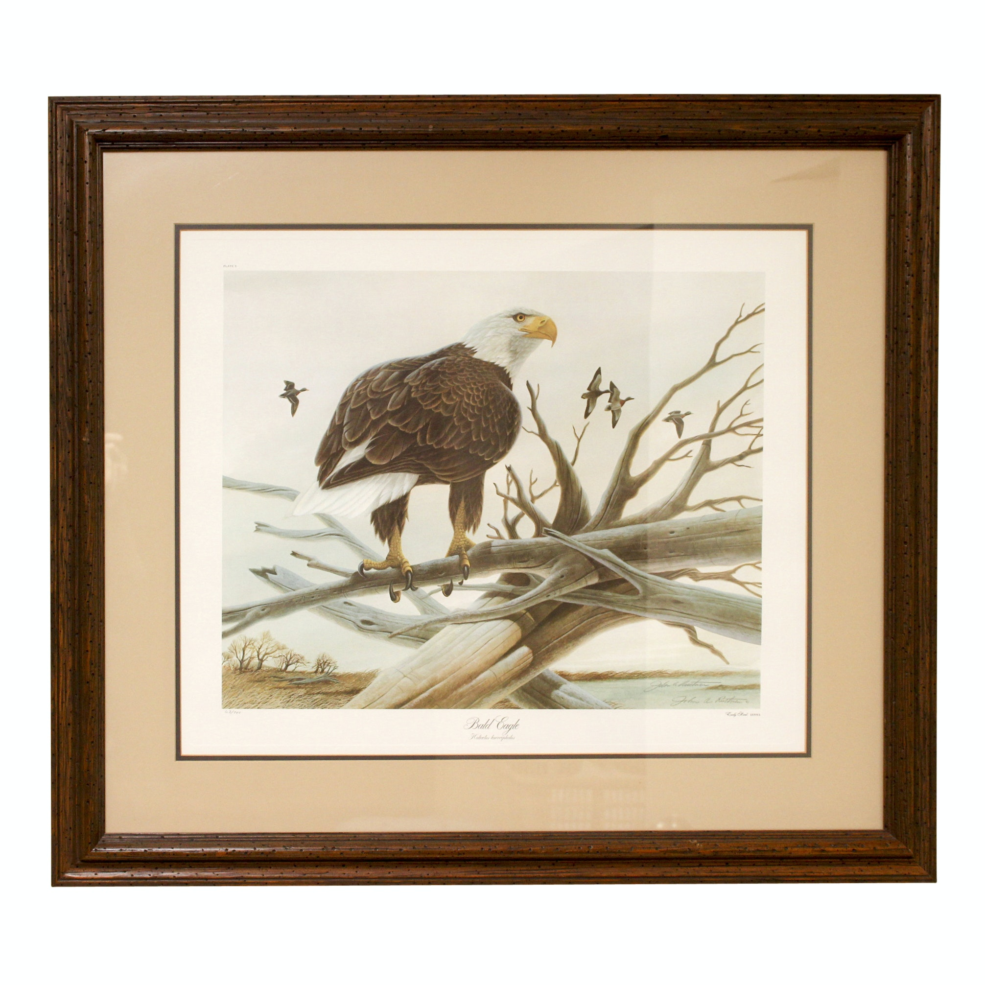 """John Ruthven Signed Limited Edition Offset Lithograph """"Bald Eagle"""""""