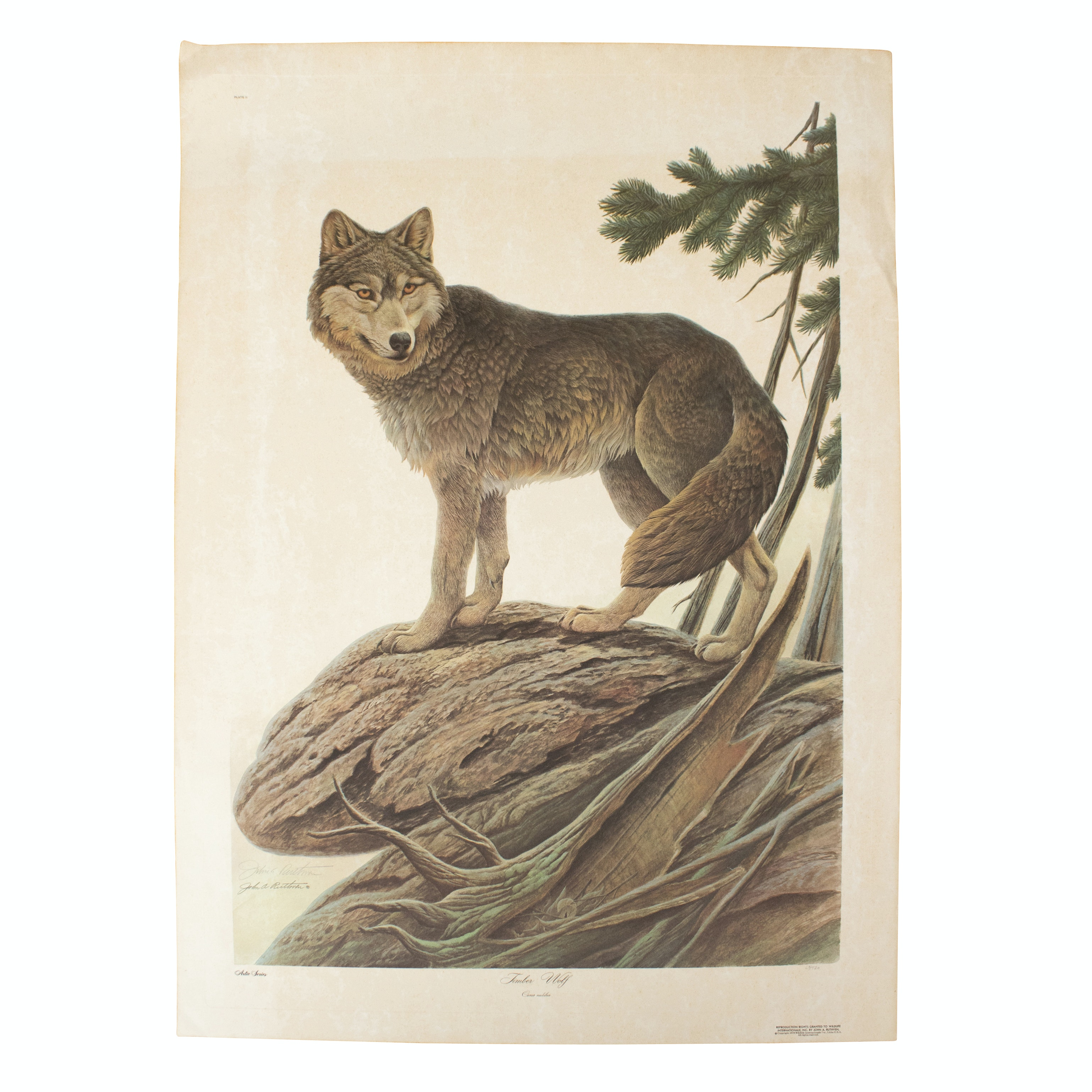 """John Ruthven Signed Limited Edition Offset Lithograph """"Timber Wolf"""""""