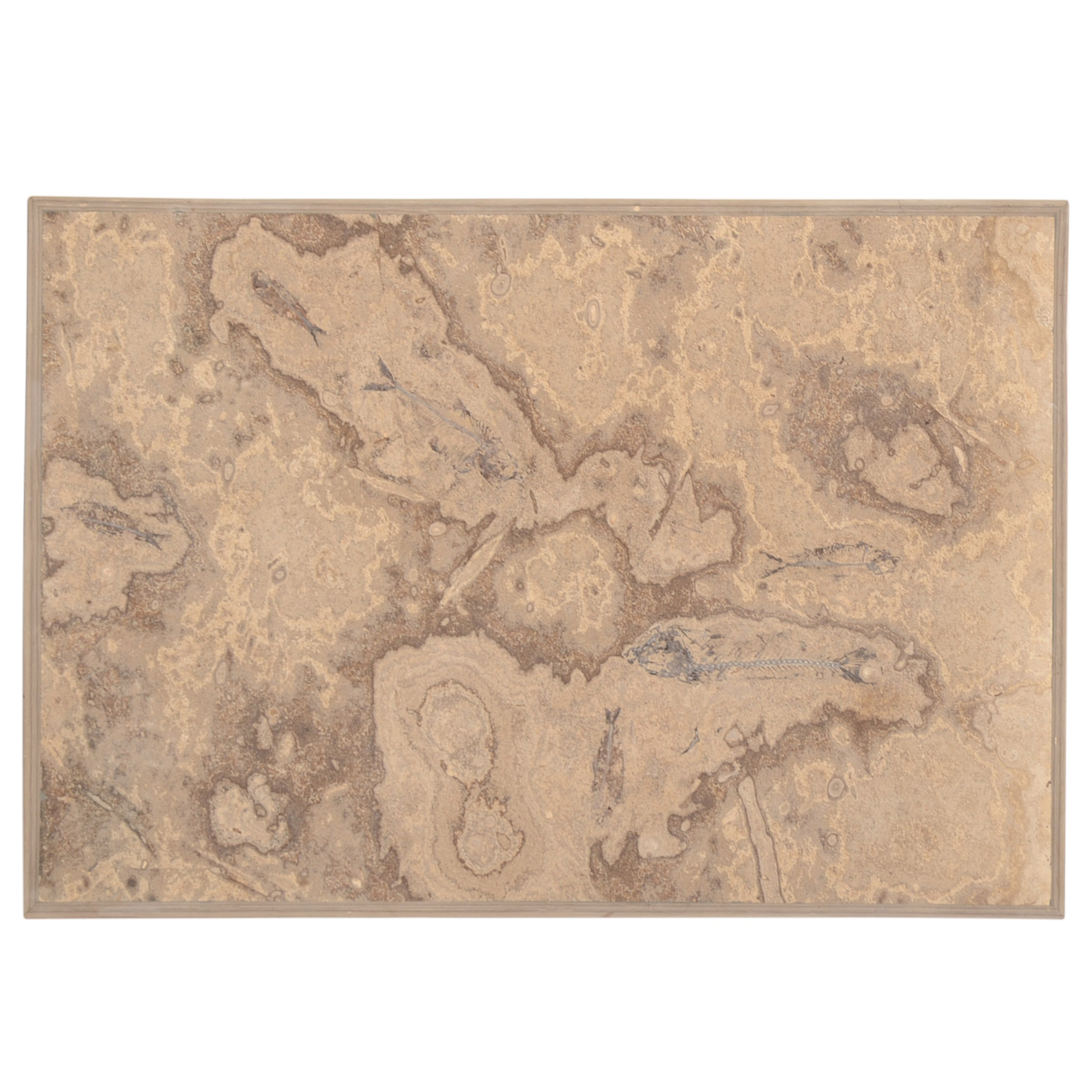 Simulated Fossilized Fish Wall Decor