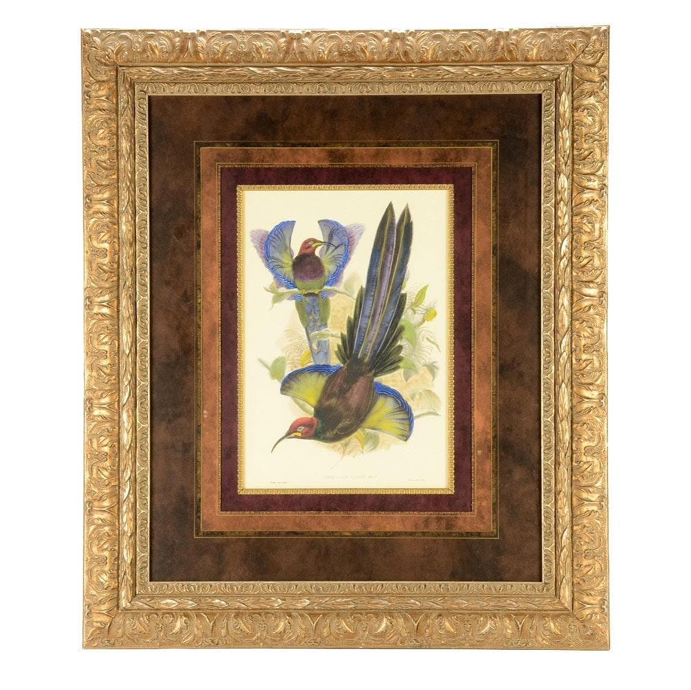 "Giclee Print after John Gould ""Bird of Paradise III"""