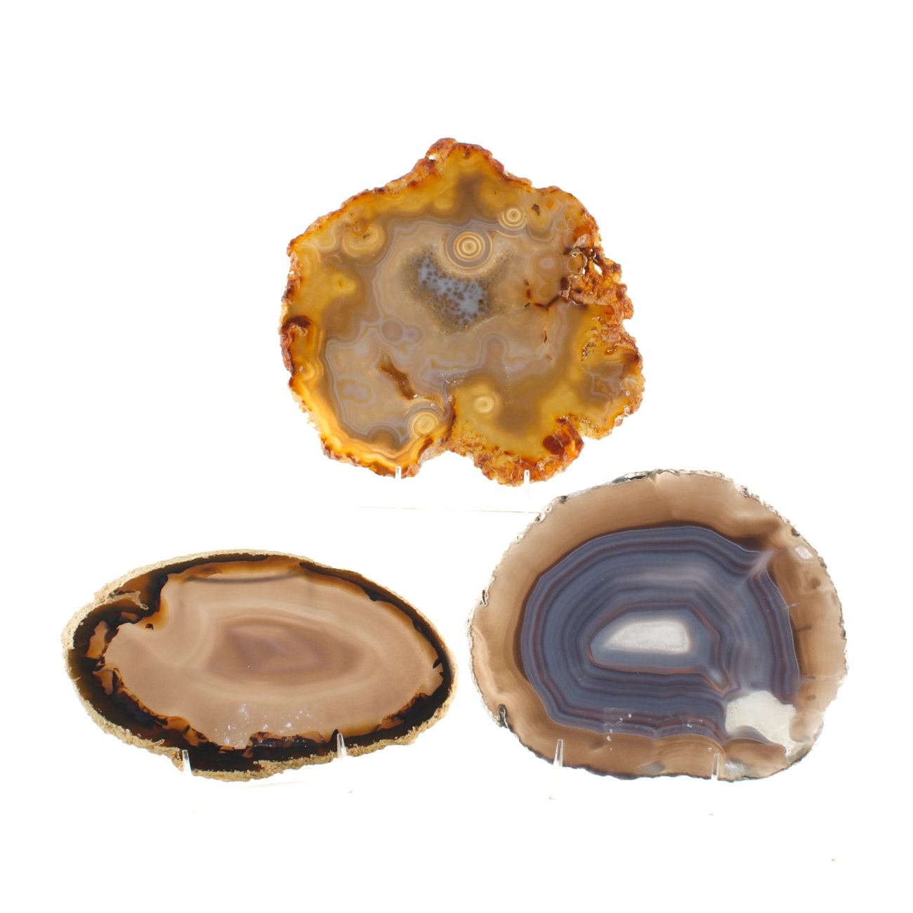 Collection of Three Agate and Quartz Geode Cross-Sections