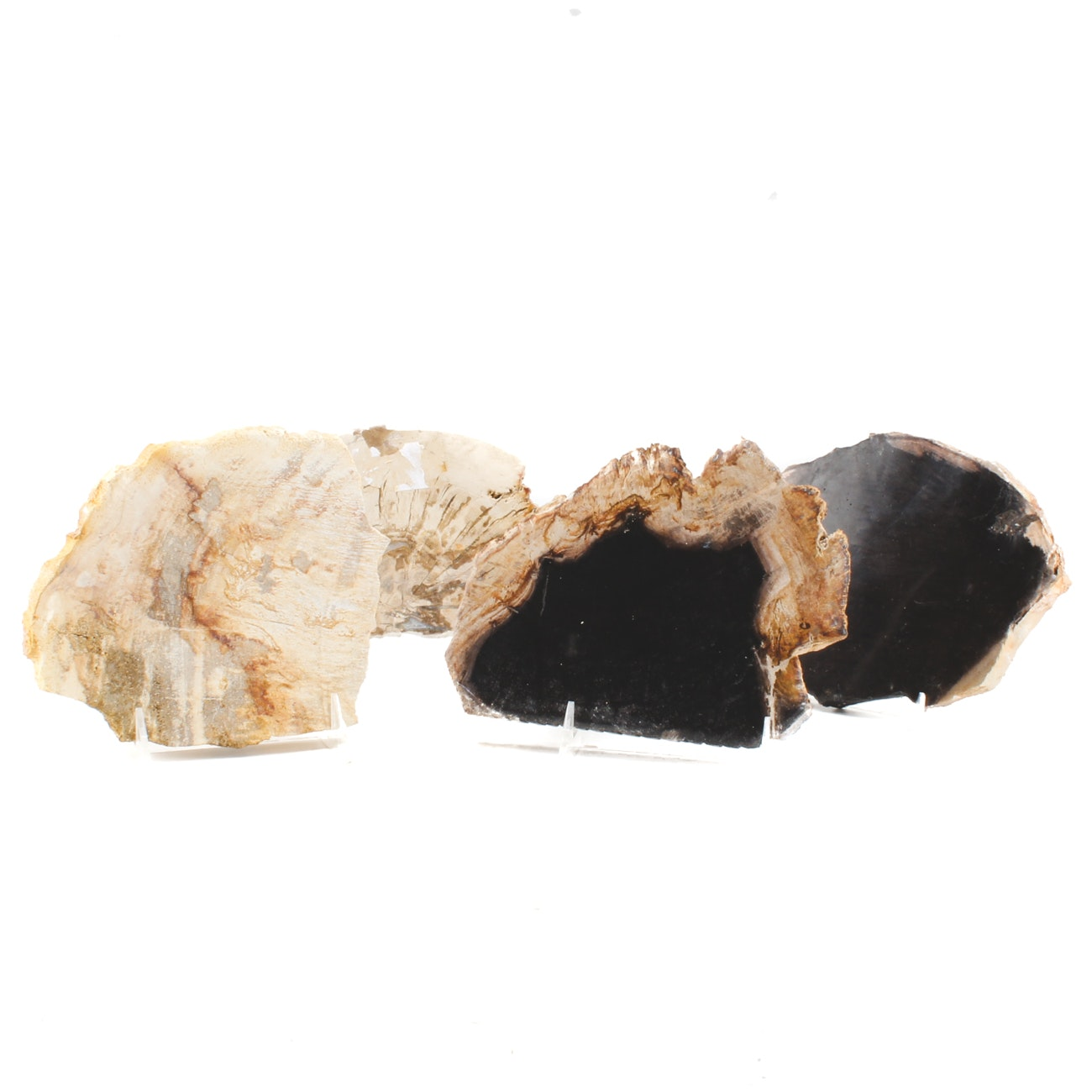 Collection of Four Polished Petrified Wood Coasters