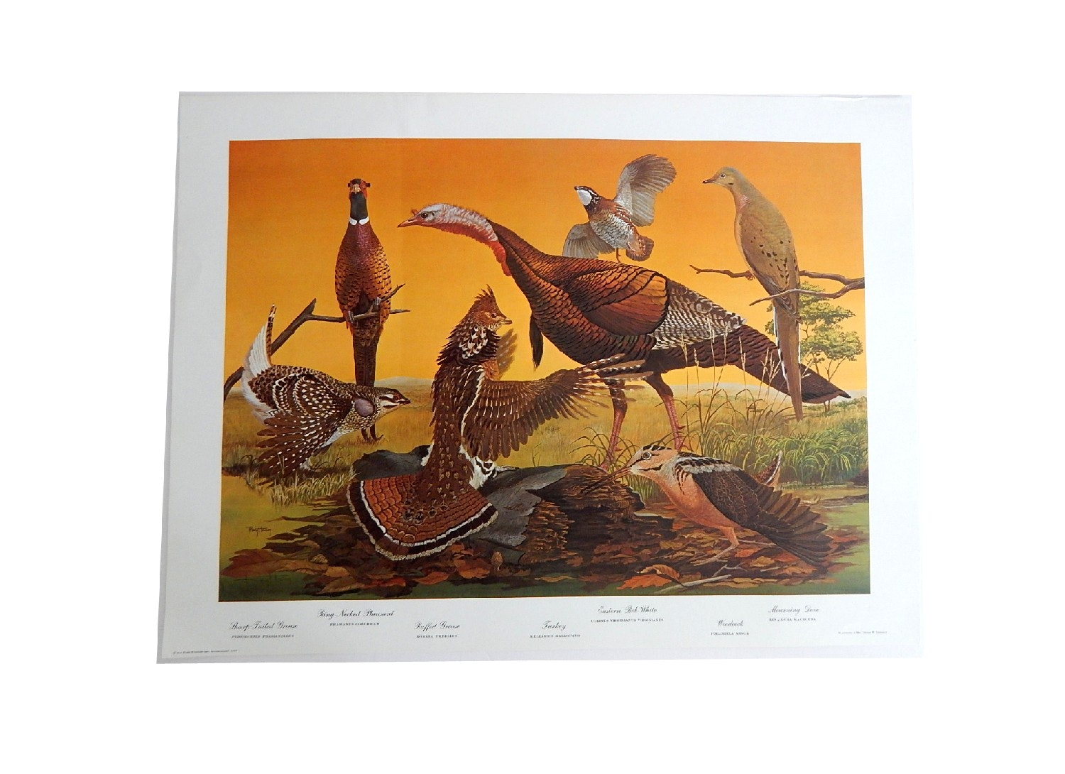 "1967 Unframed Offset Lithograph ""Upland Birds"" After Ray Harm"