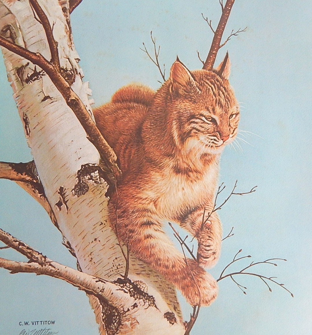 "C.W. Vittitow ""Kentucky Wildcat"" Signed Artist Proof Limited Offset Lithograph"