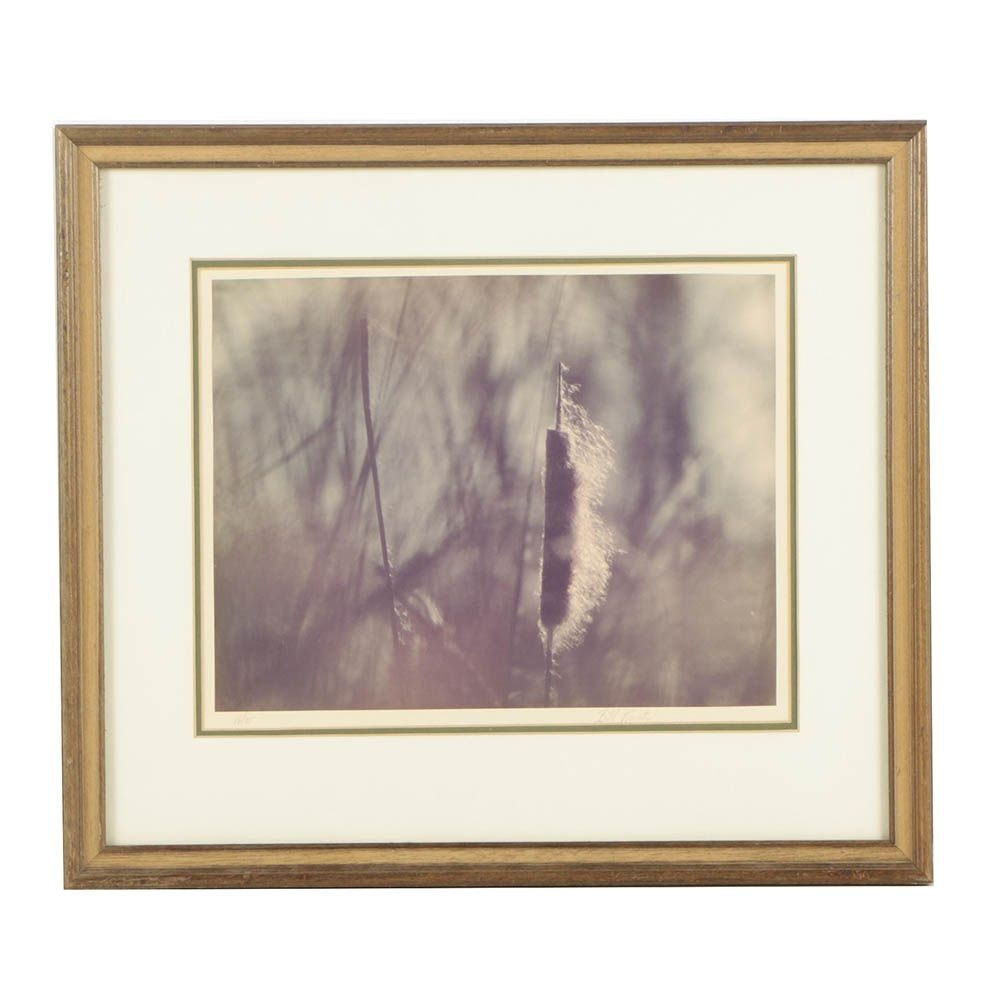 "Bill Curtis Limited Edition Photograph ""The Cattail"""