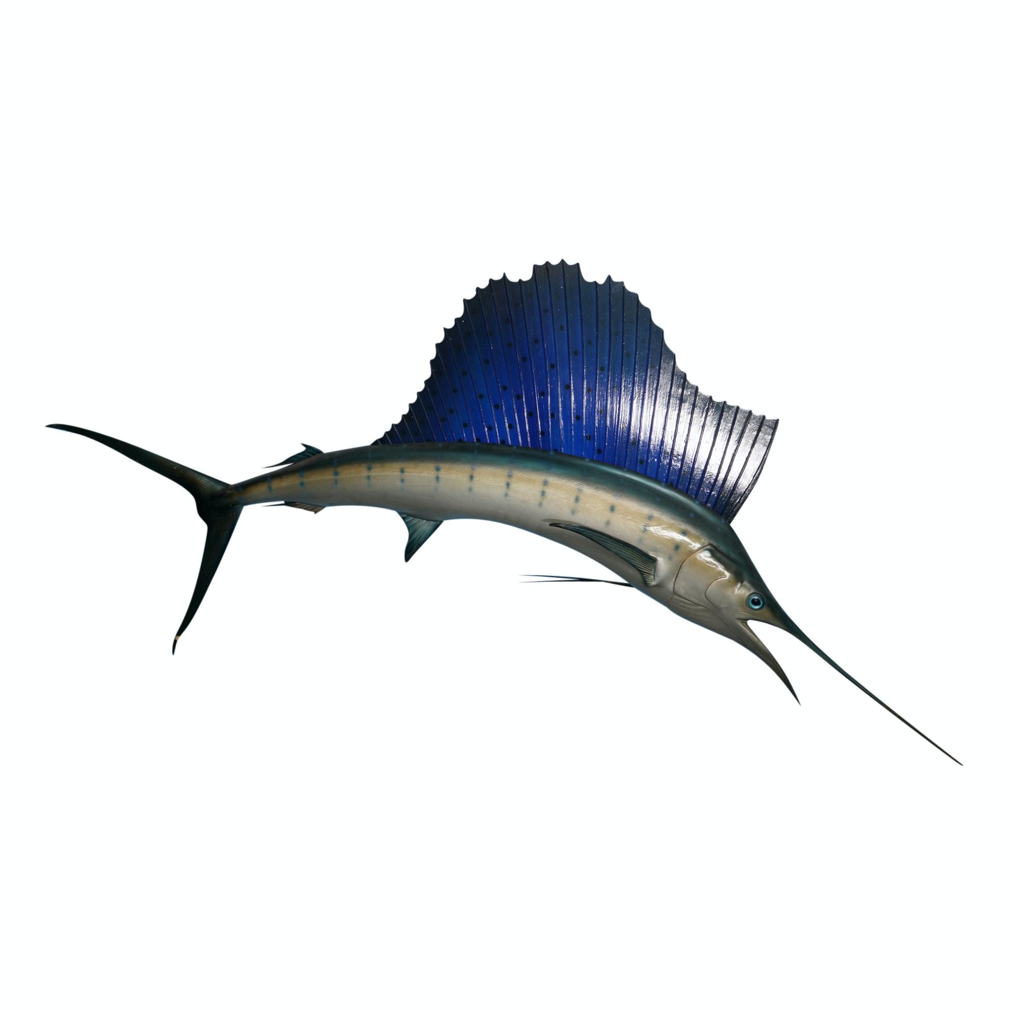 Blue Marlin Taxidermy Mount