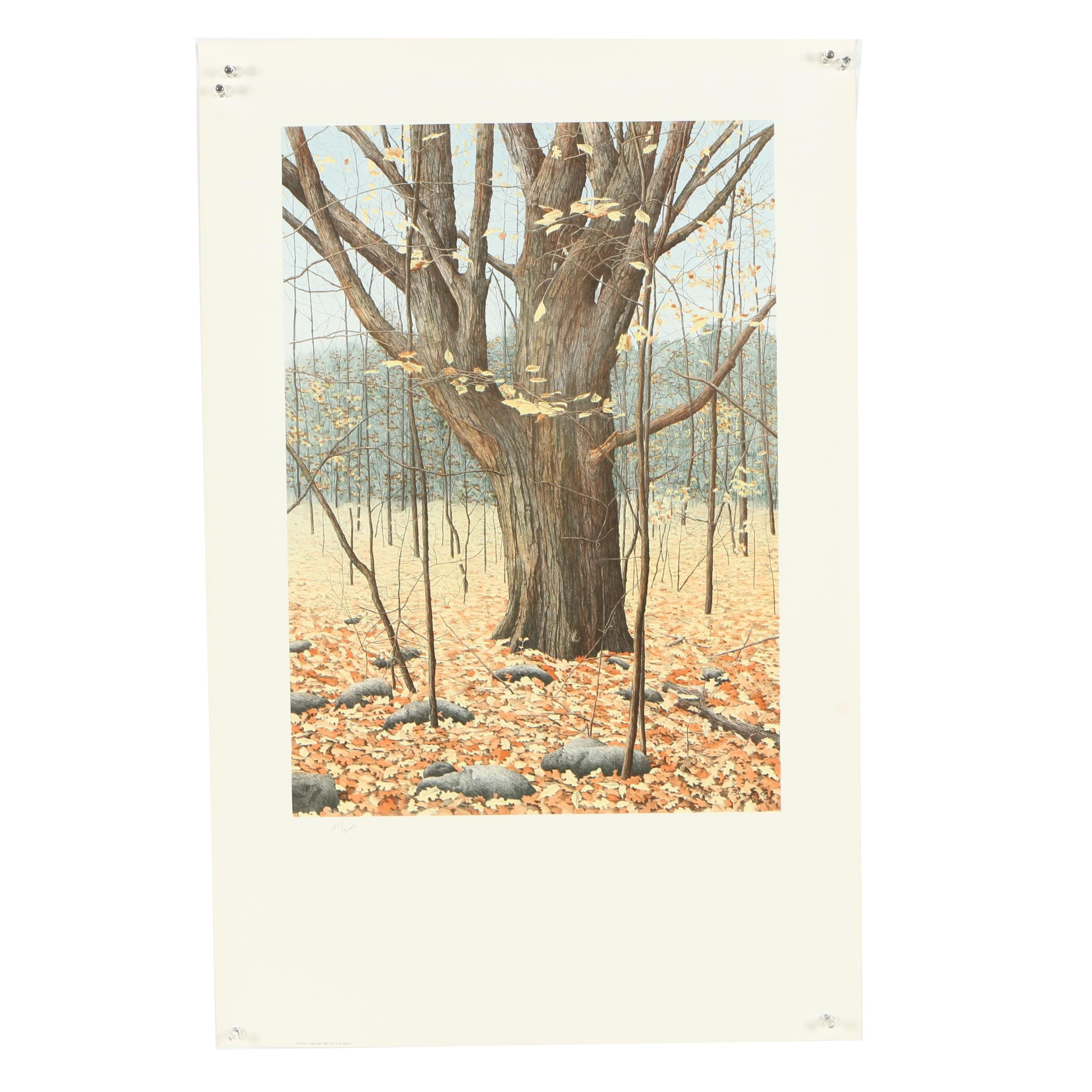 "Helen Rundell Lithograph ""Old Oak"""
