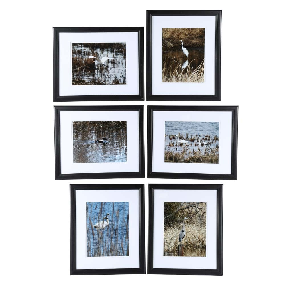Framed Waterfowl Photographs