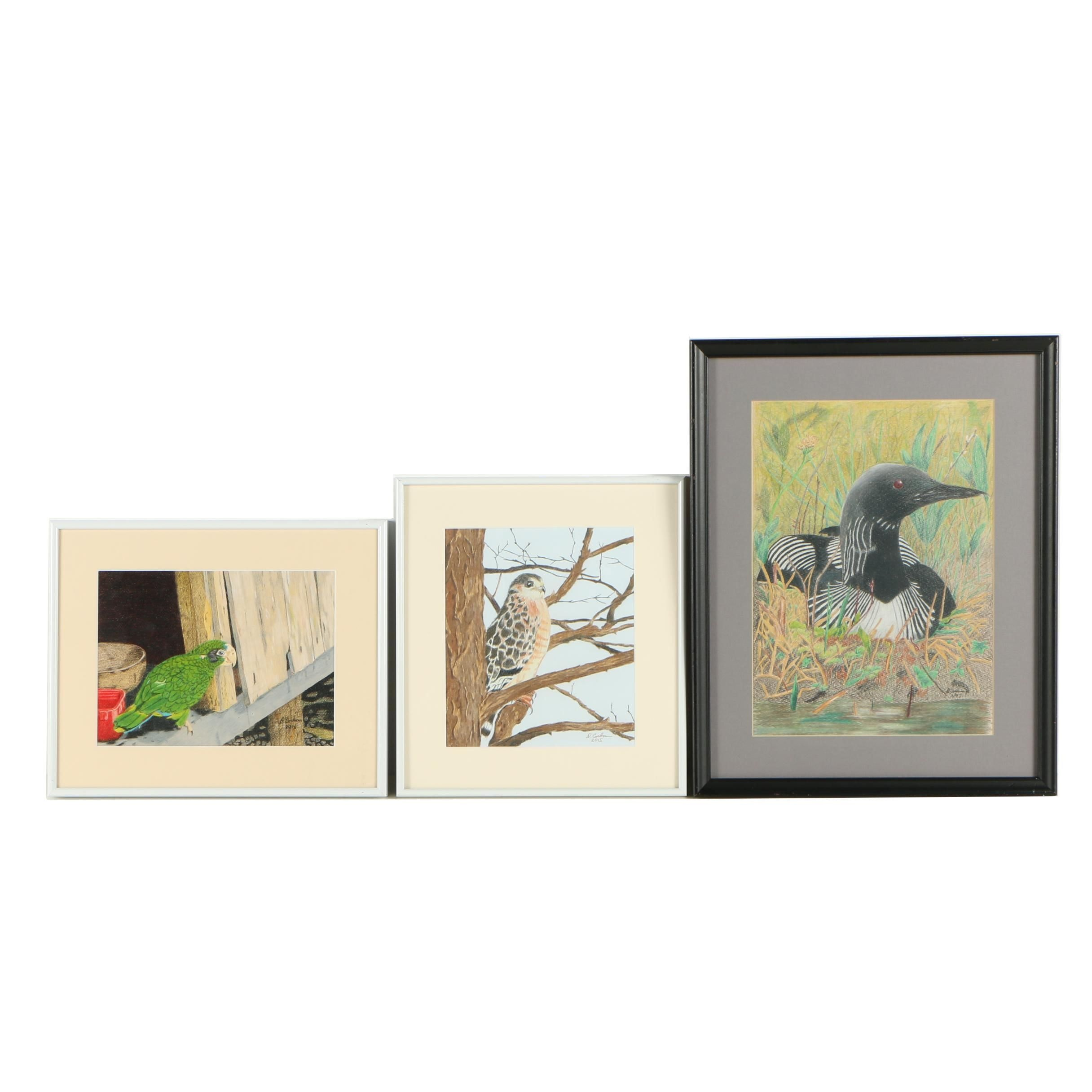 David Cochran Bird Themed Colored Pencil Drawings