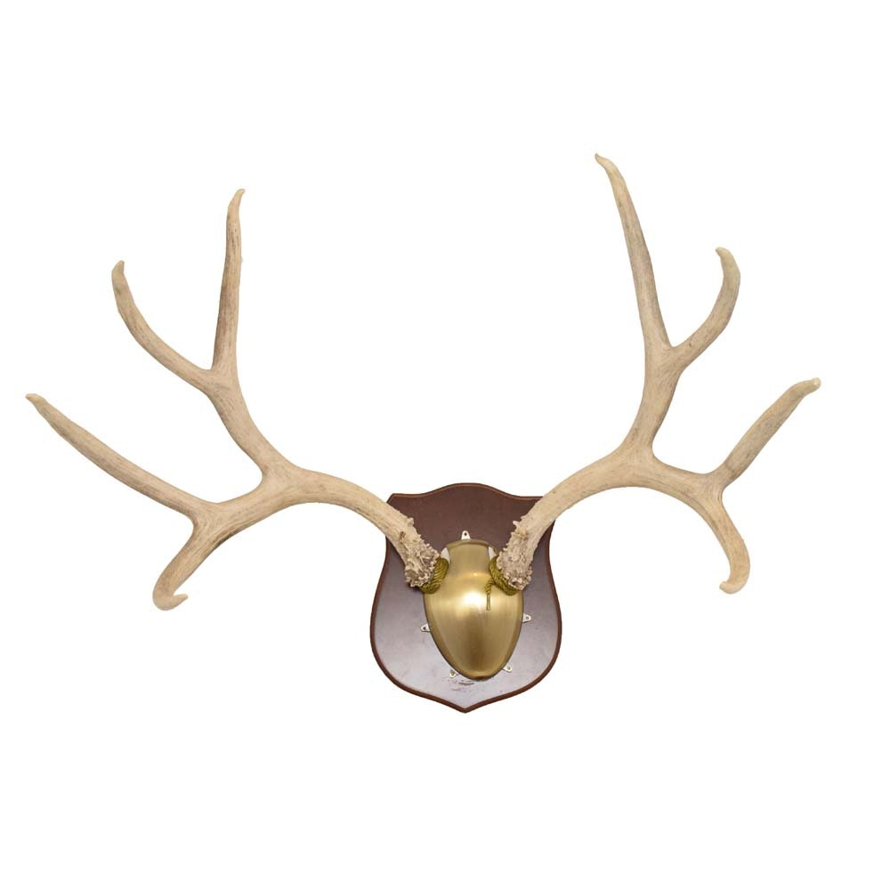 Mounted Eight Point Deer Antlers