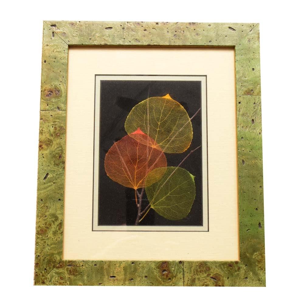 Booker Morey Leaf Lines Mixed-Media Aspen Leaf Art
